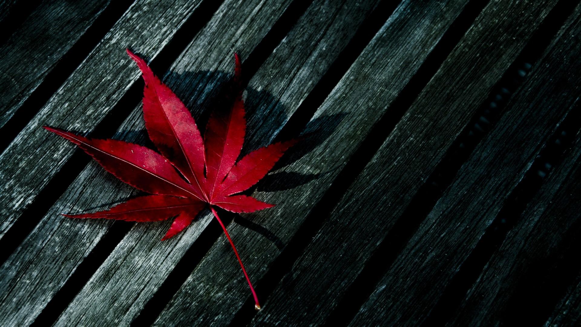 Earth – Leaf Wallpaper