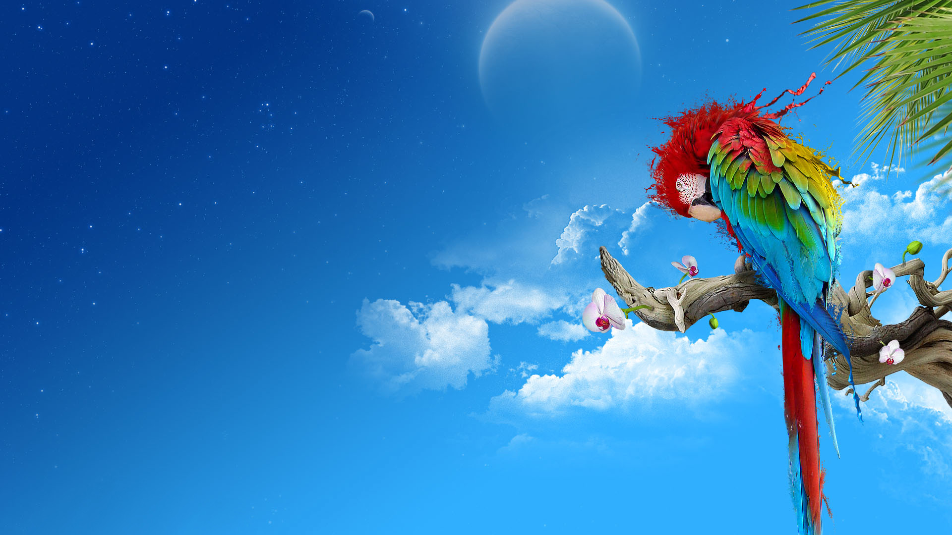 parrot abstract hd wallpapers