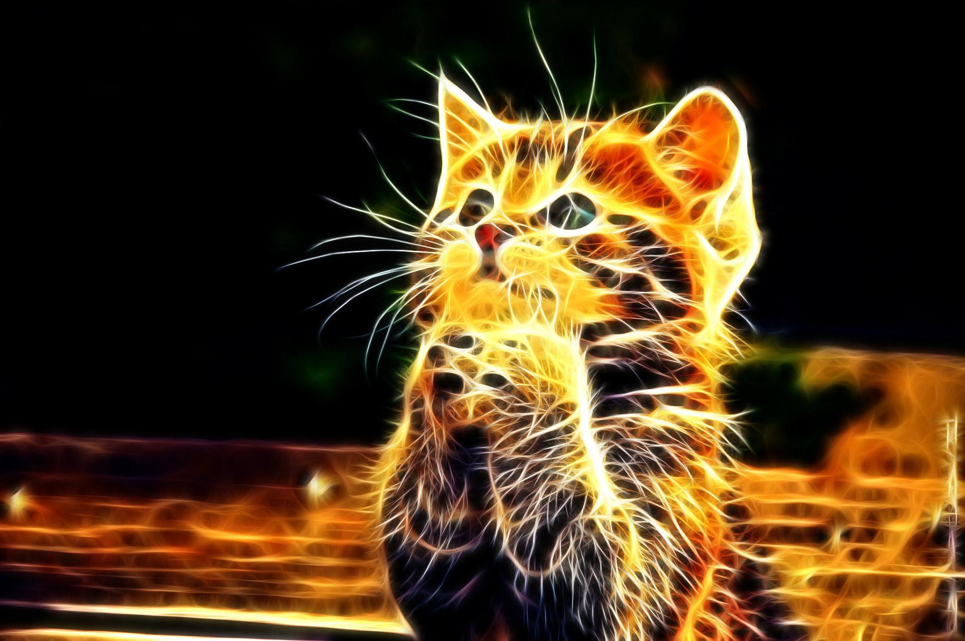 Cat Abstract HD Wallpaper