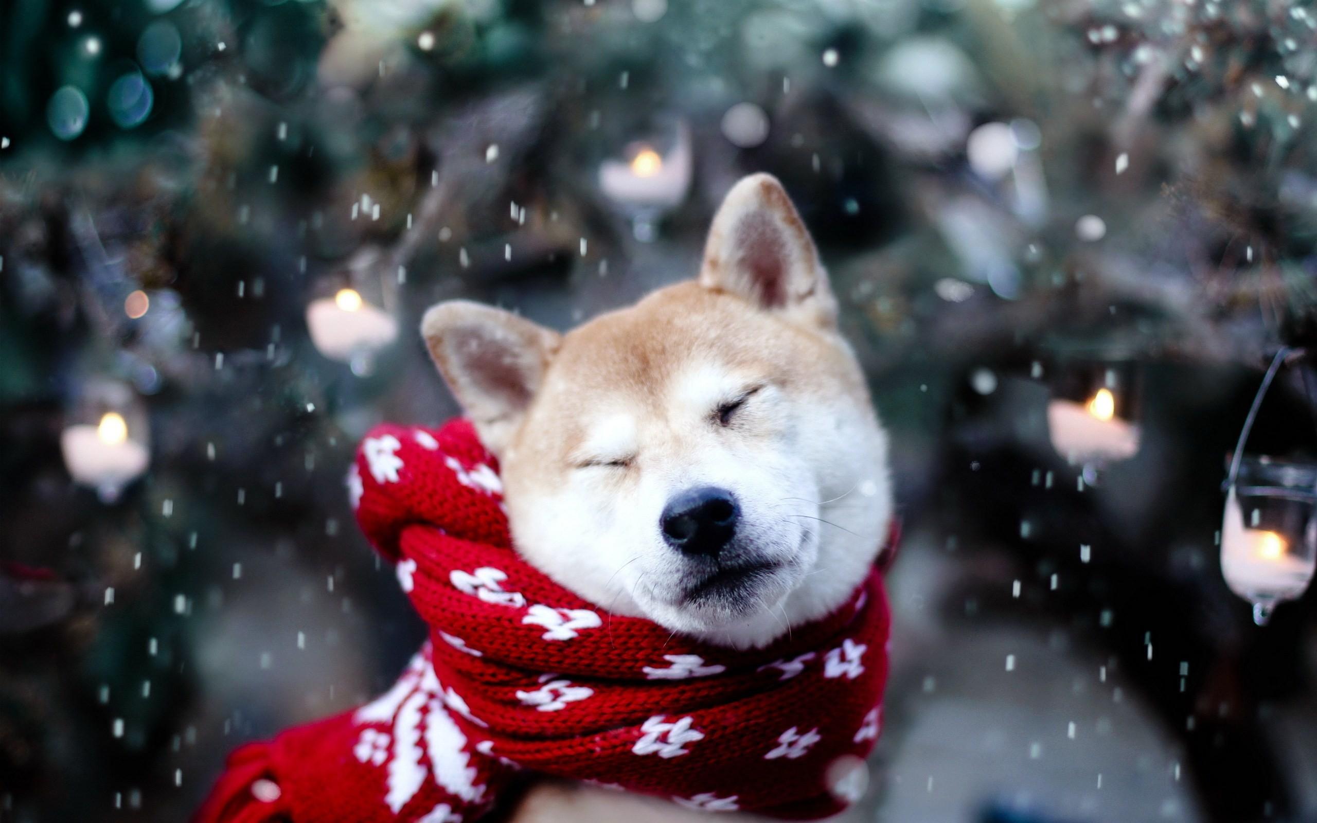 cute dog, winter, snowflakes, animal photos, mood, wallpaper