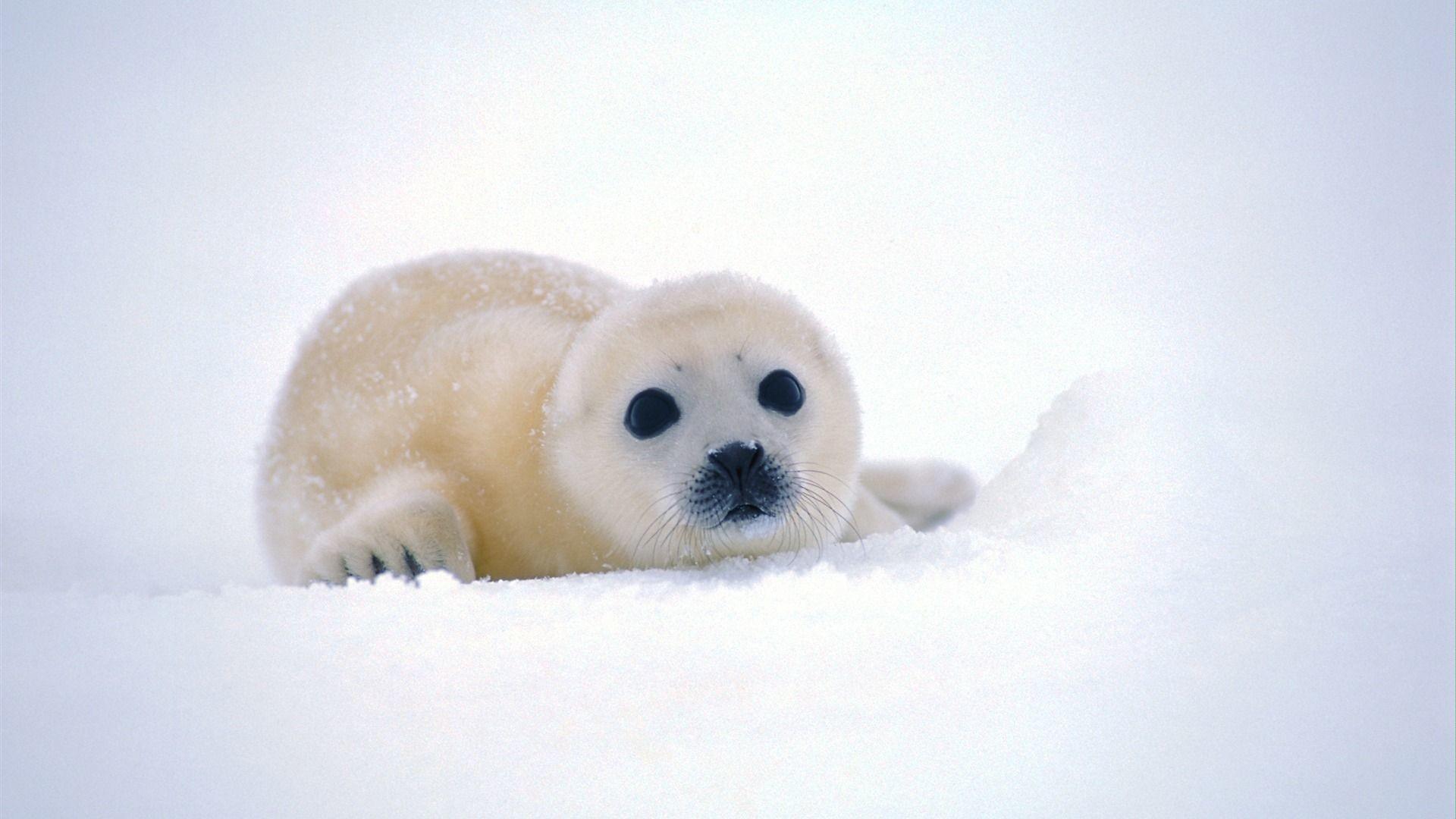 Beautiful Cute Baby Animal Desktop Backgrounds