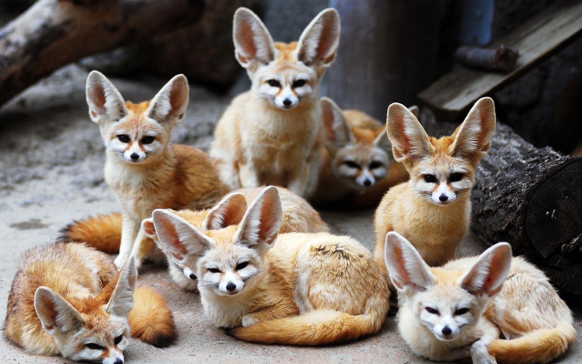 Animal · Cute fox animal in winter season | HD Wallpapers Rocks