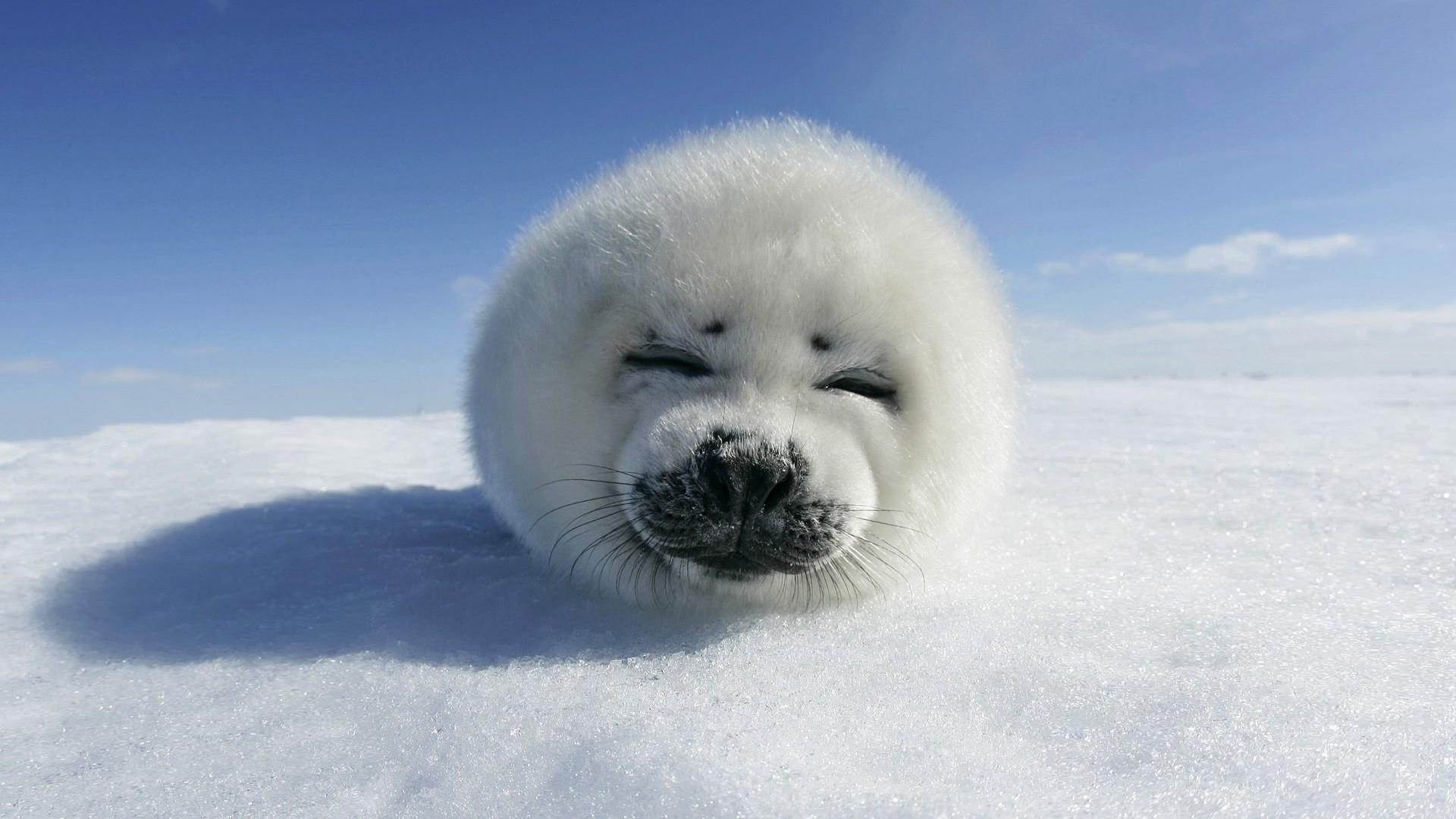 HD Cute <b>Winter Animal</b> Wallpaper, Live <b