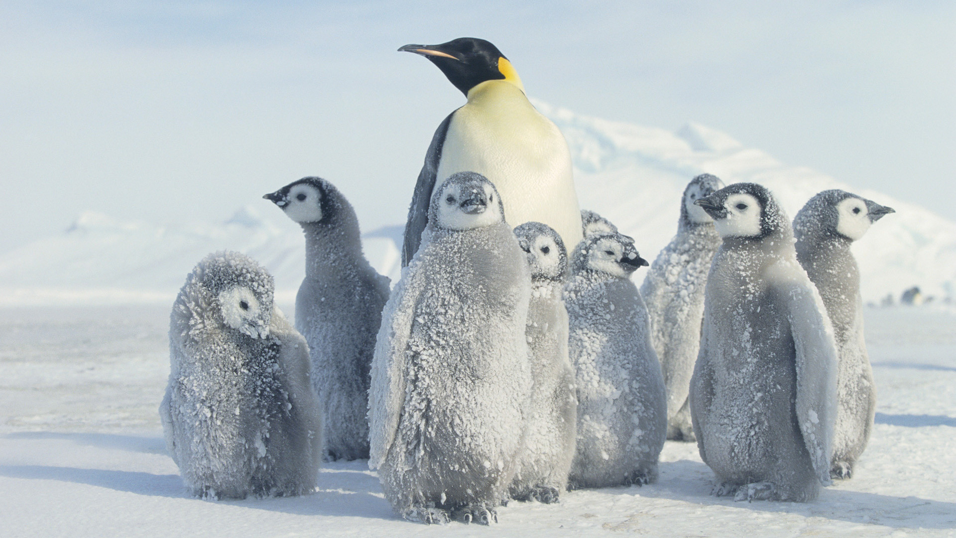 Penguin Wallpaper Fantastic Penguin Images K Ultra HD | HD Wallpapers |  Pinterest | Wallpaper