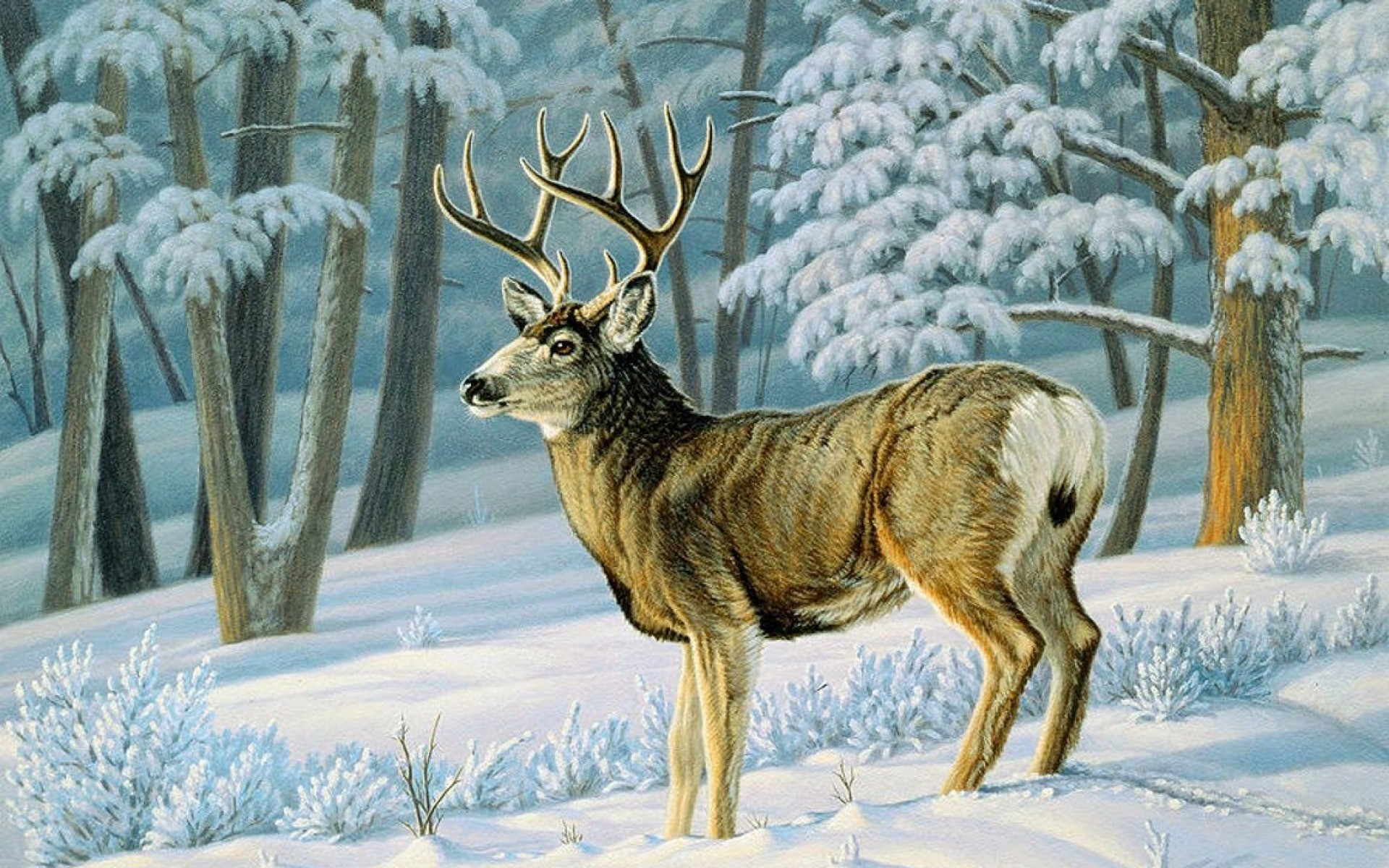 Winter Forest Cute Deer Slope wallpapers and stock photos
