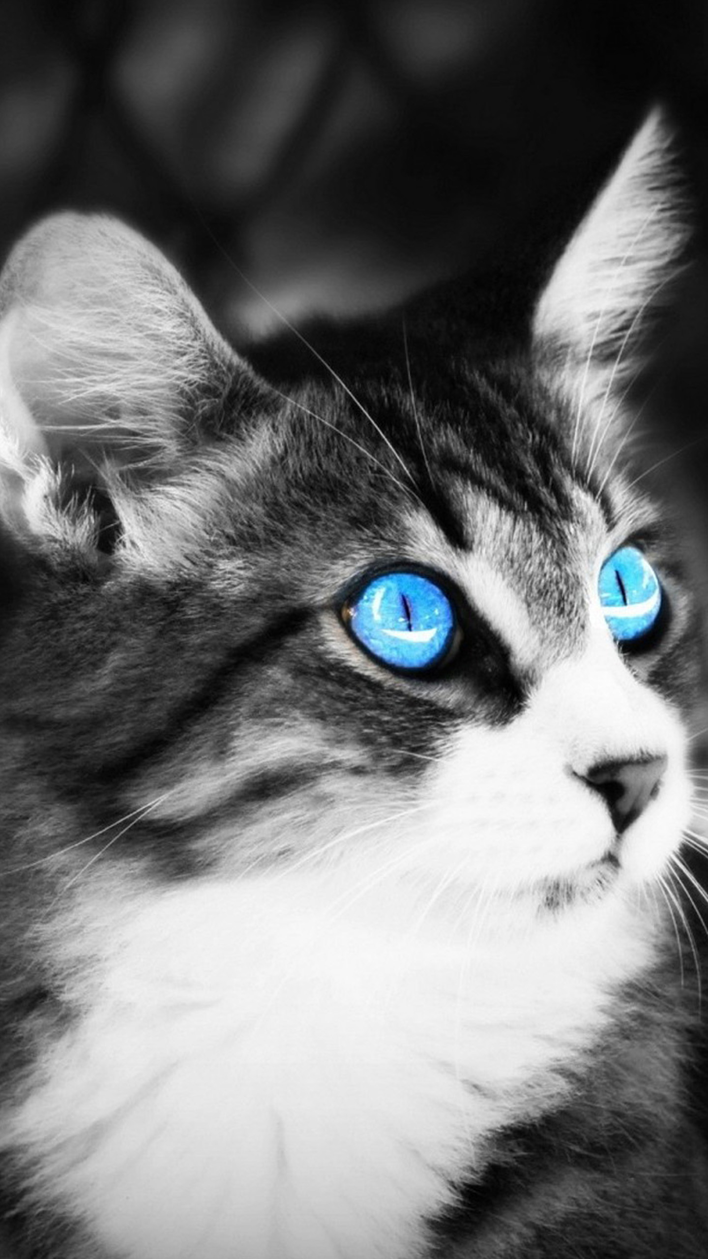 Black and white cat Galaxy S6 Wallpaper