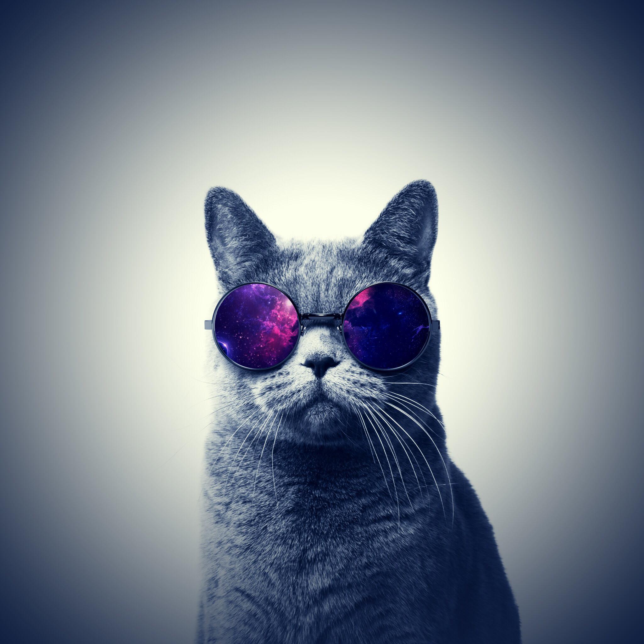 #cat#galaxy#glasses