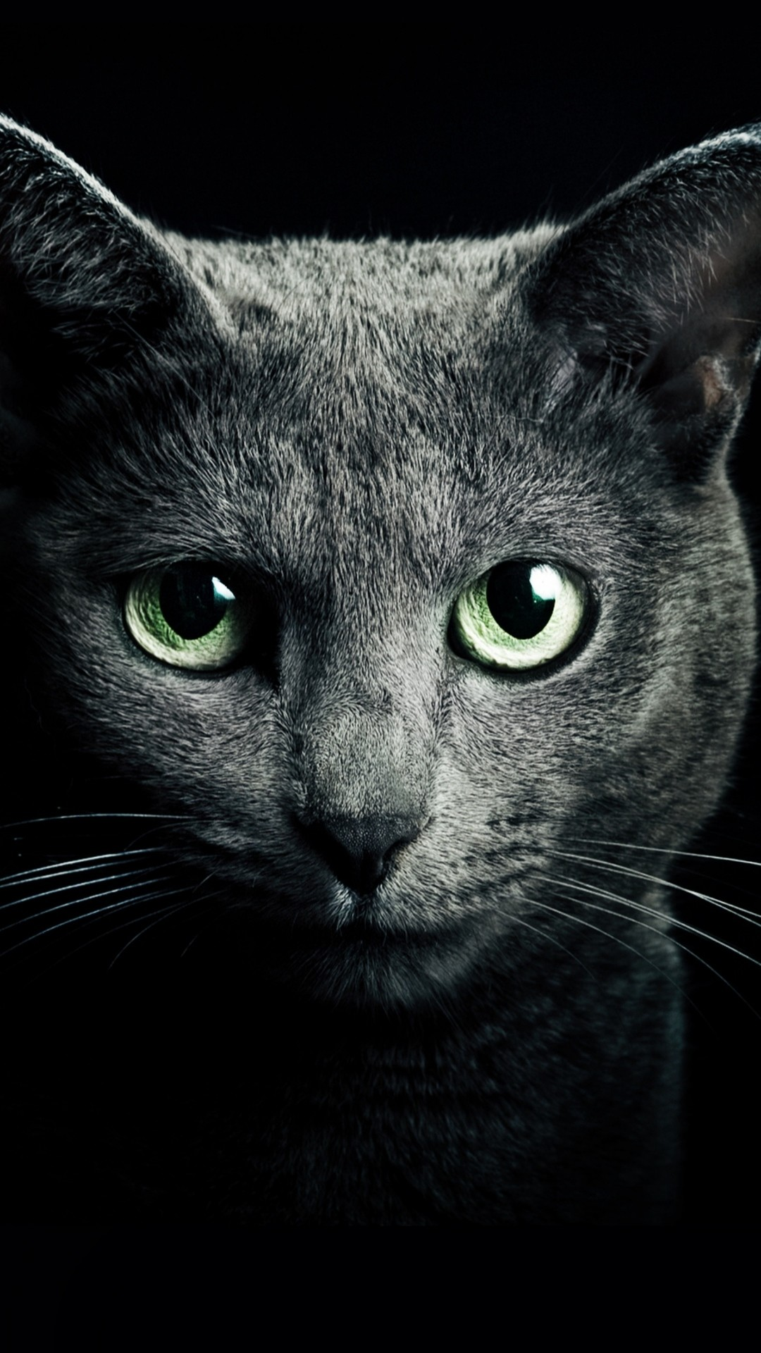 Preview wallpaper cat, black, breed, russian, blue eyes, green eyes,