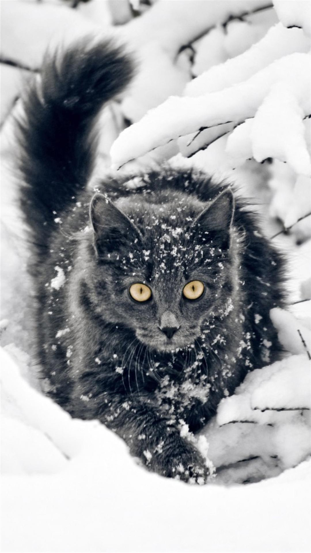 Snow cat Galaxy Note 3 Wallpapers, HD, Note Wallpapers, Galaxy Wallpapers
