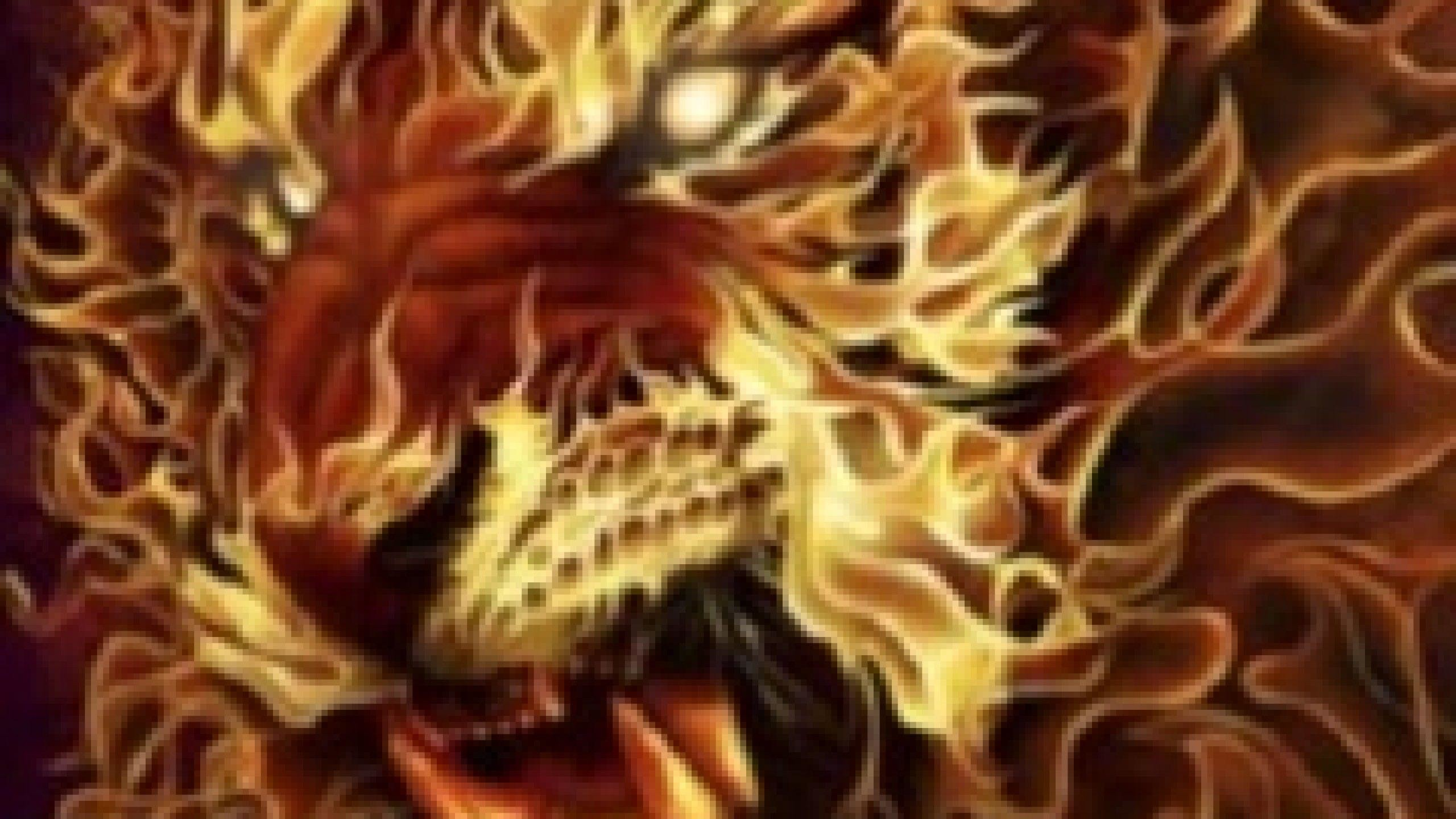 Lion Hd Wallpapers Page 2 Images Pictures