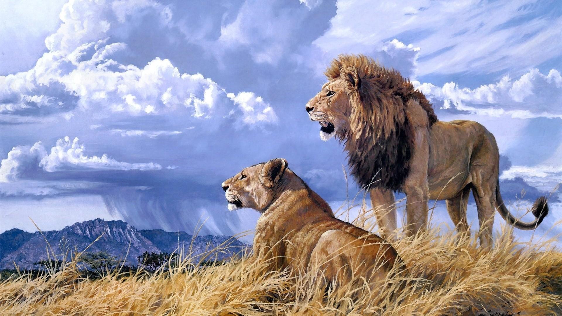 Lions. Lions Wallpaper