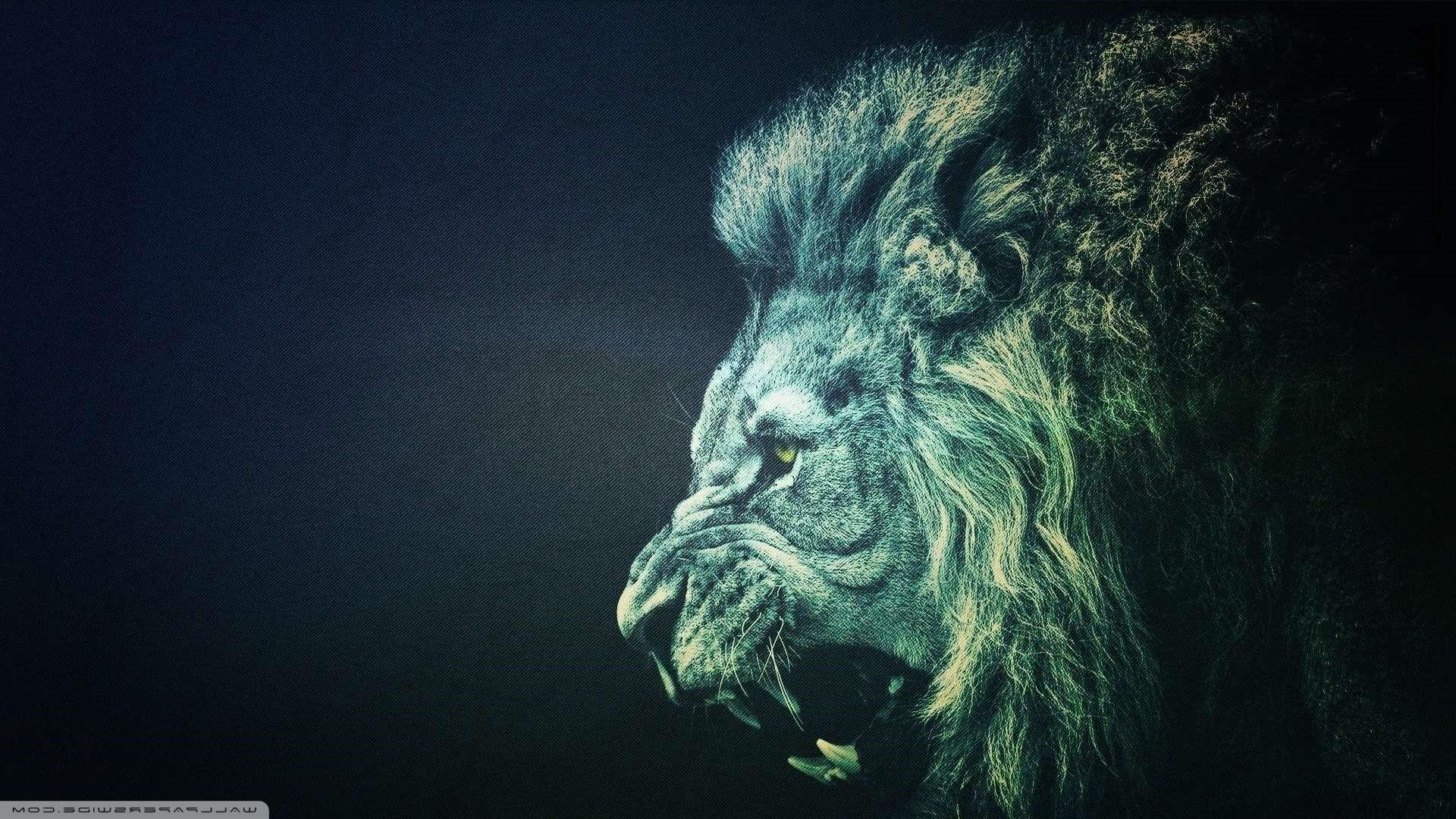 Cool Lion Wallpapers FjZL39 Cool Lion Wallpaper Cool Lion Wallpaper Hd …