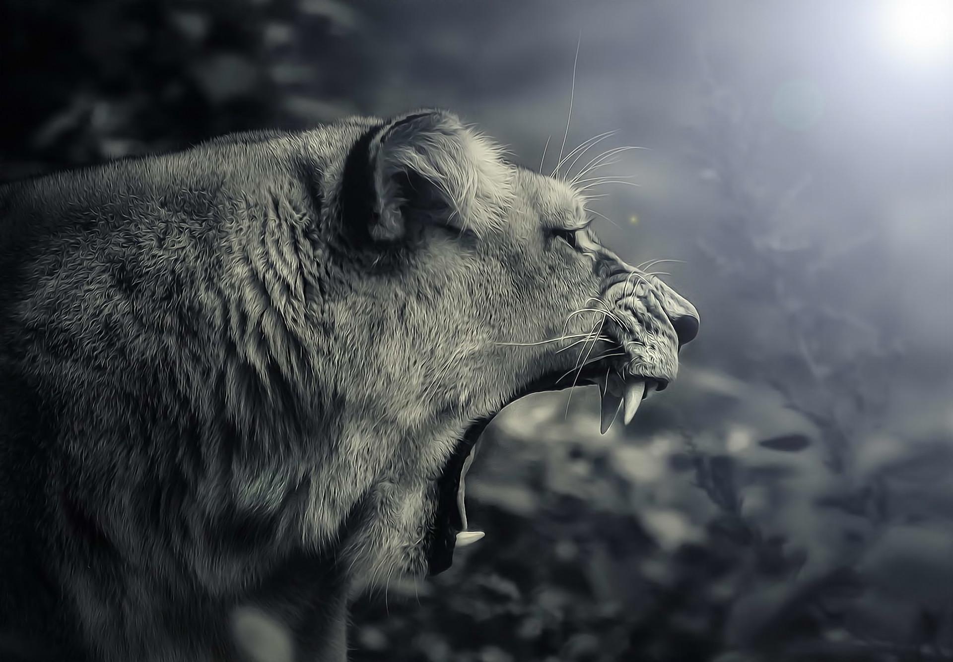 female lion roaring royalty black and white digital art