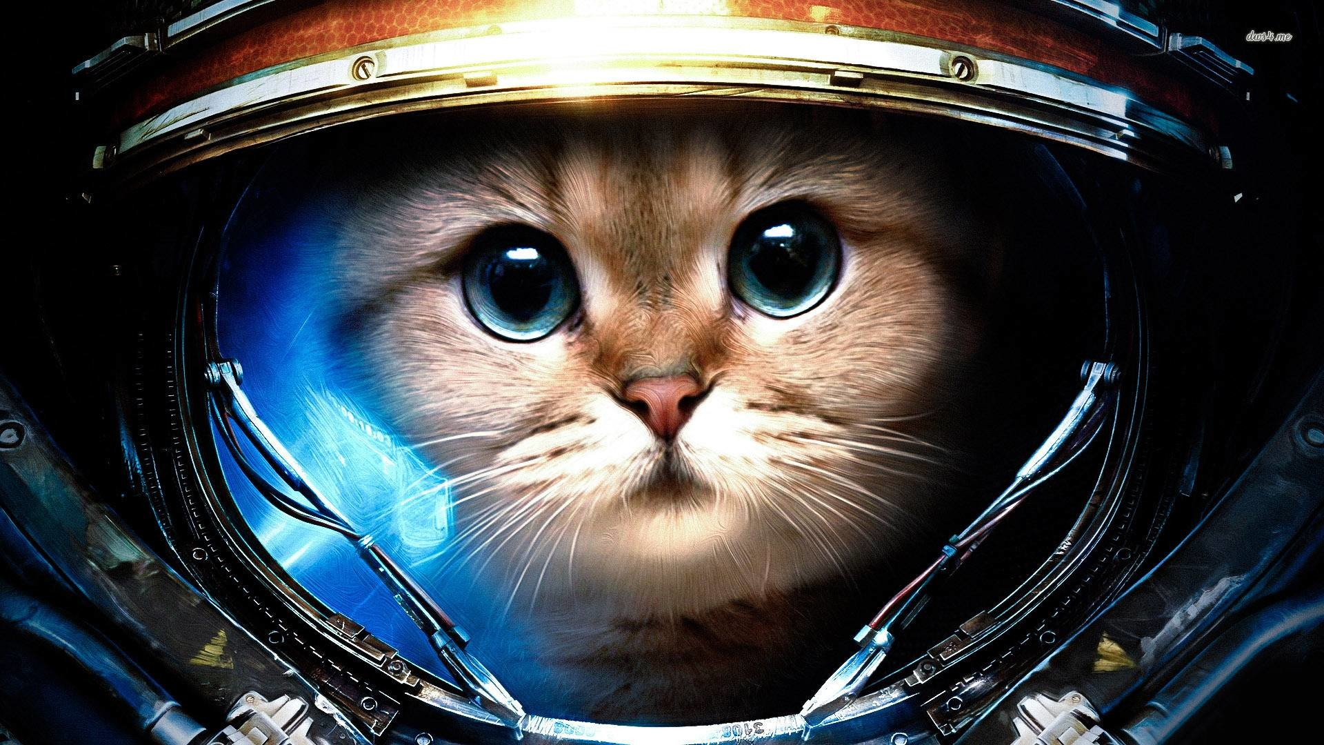 SPACE CAT, He is going to be the first cat to walk on the moon
