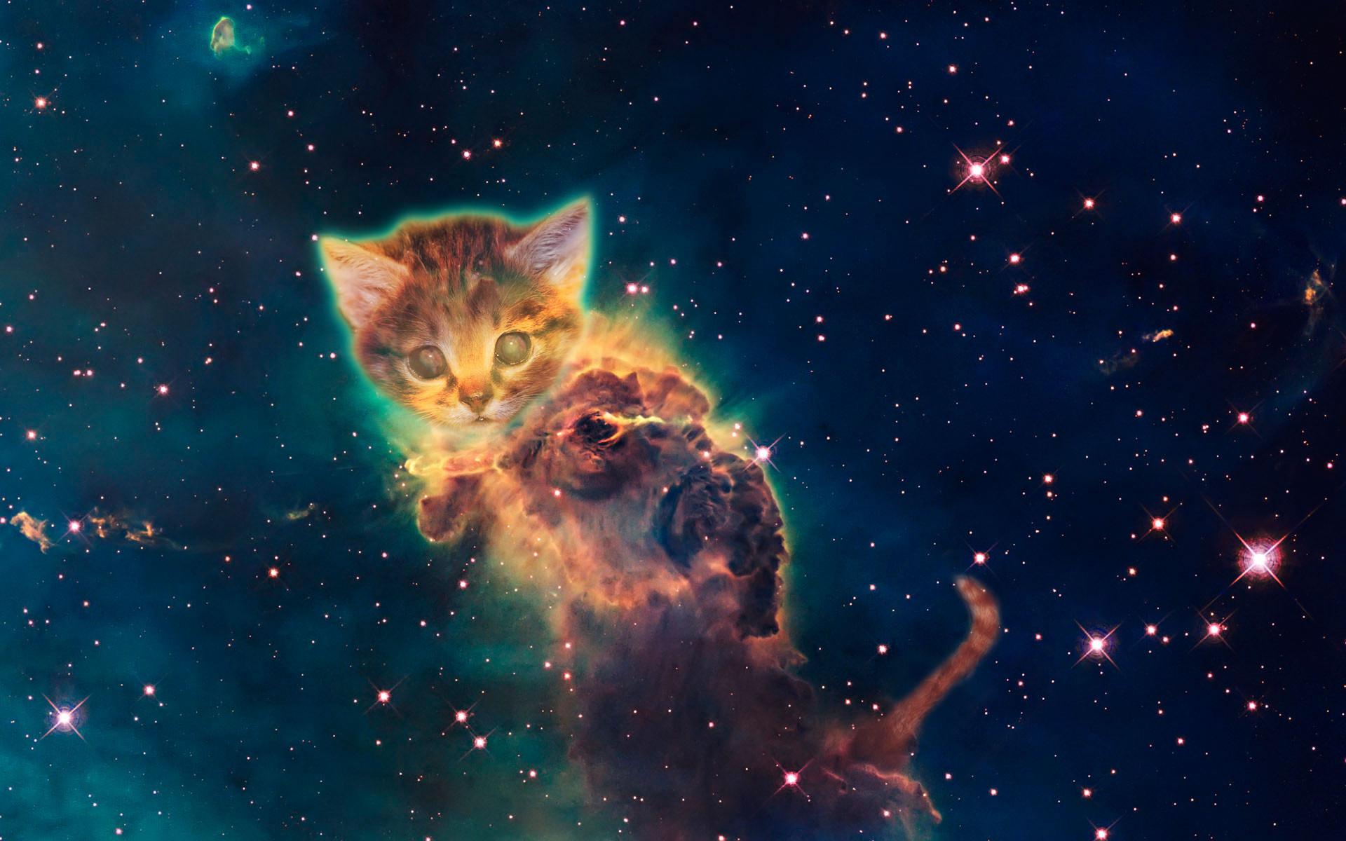Galaxy Cat Wallpaper – Bing images