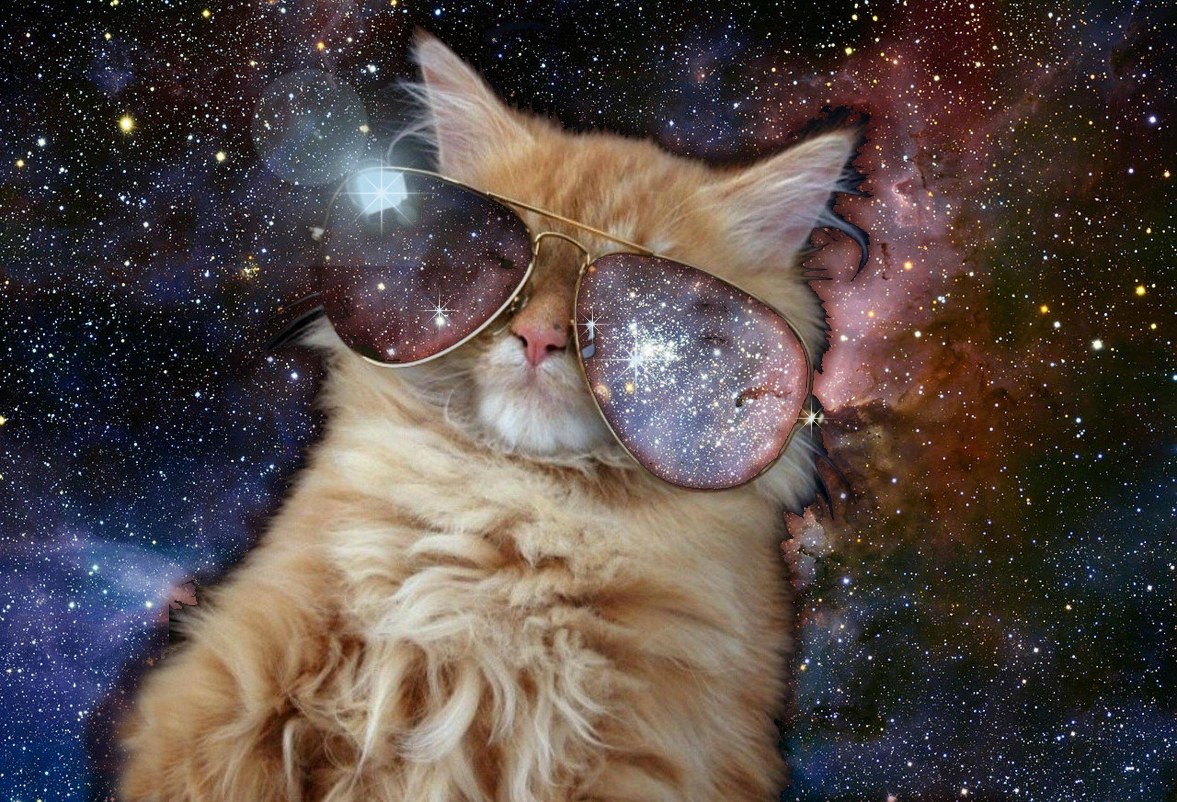 Space Cat Tumblr Space cat