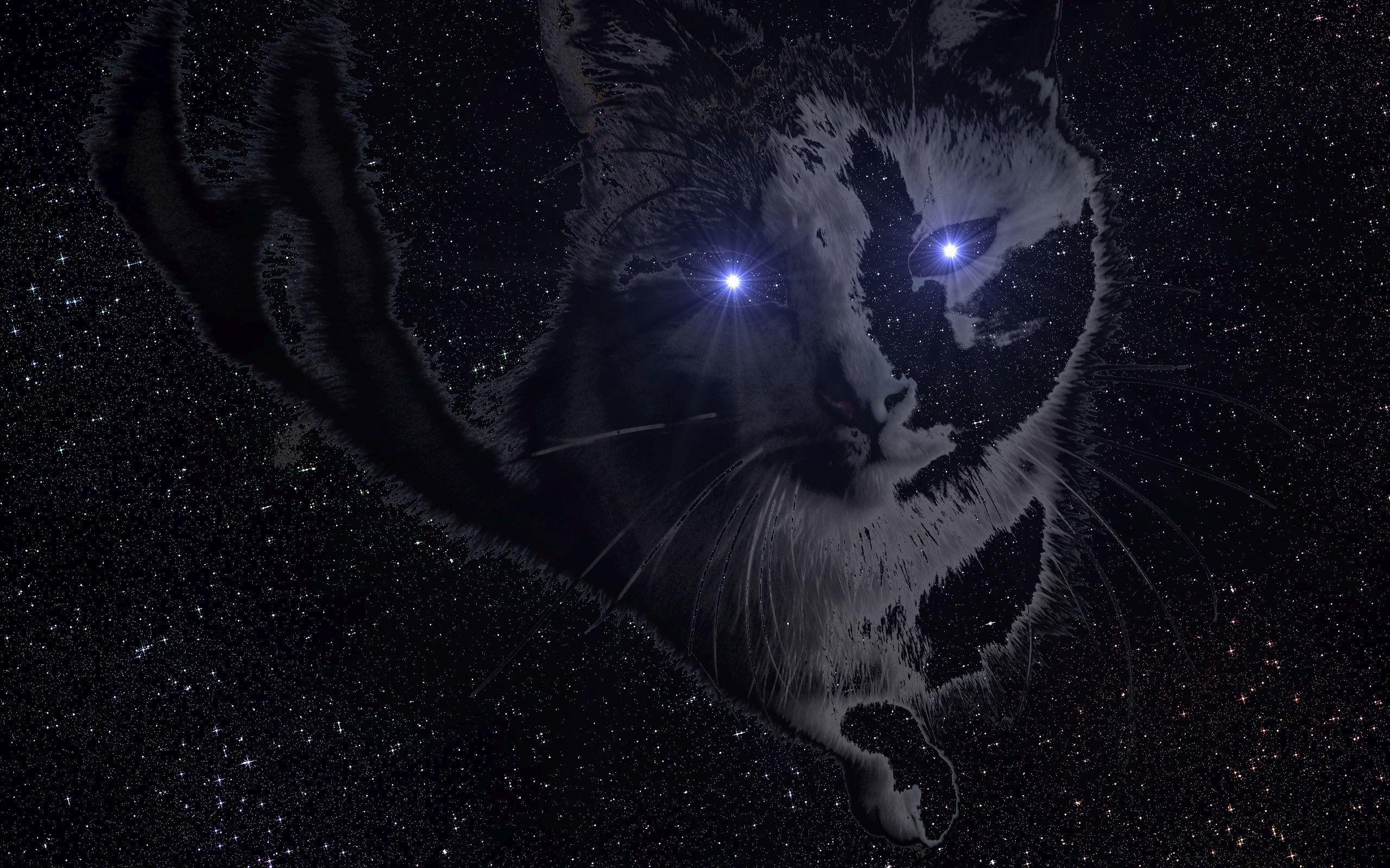 … Space cat HD Wallpaper 2560×1600
