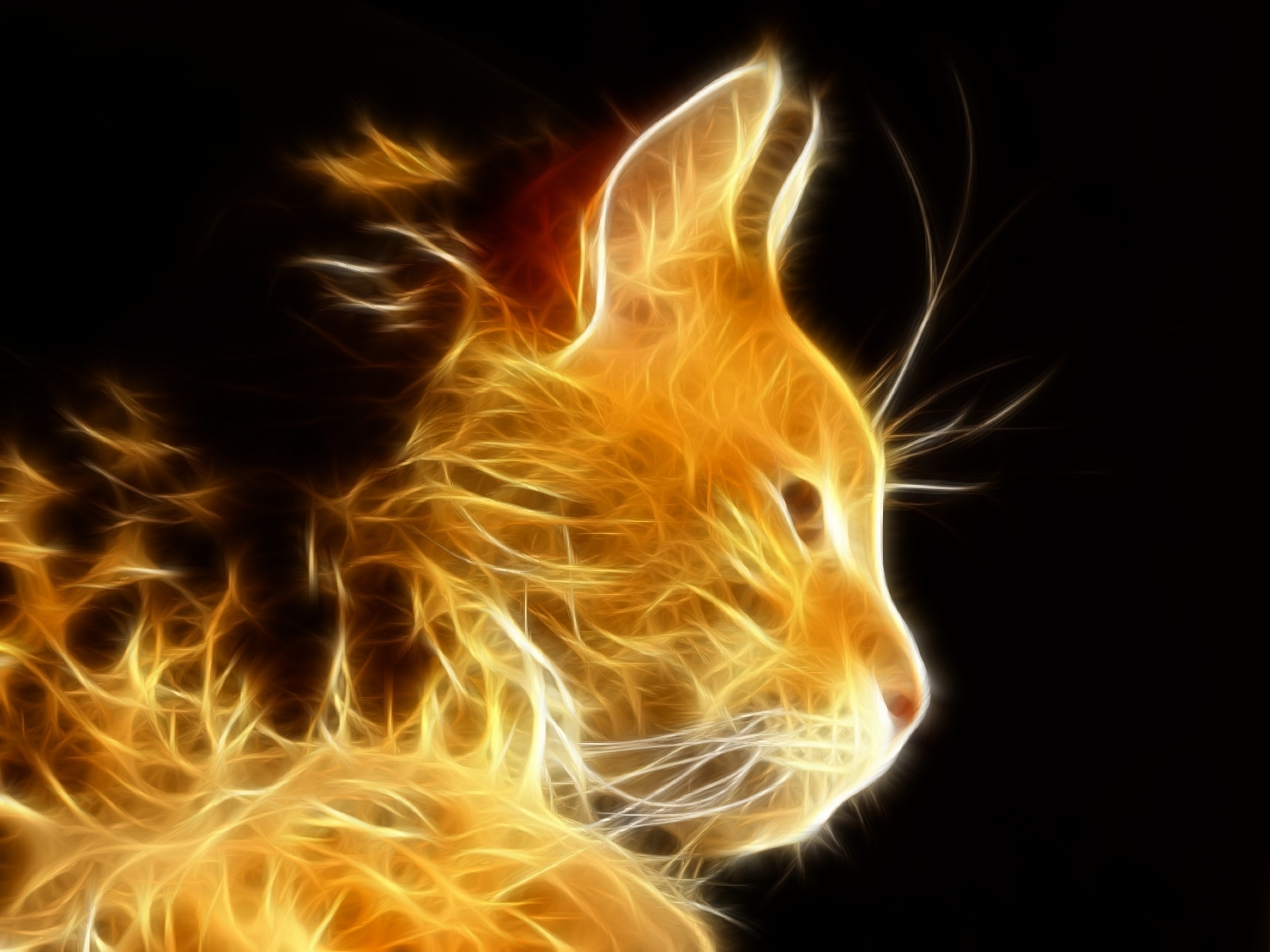 Free Space Cat Wallpapers For Iphone Â« Long Wallpapers