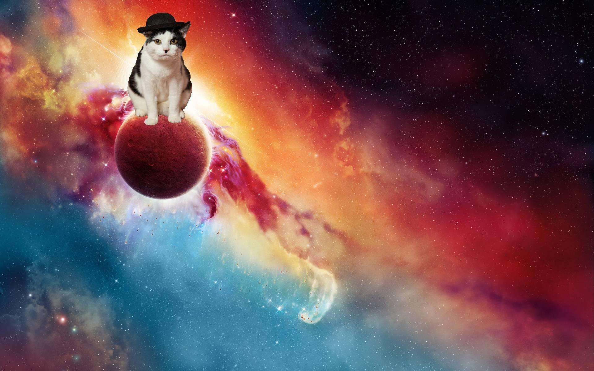 Space Cat Wallpaper Wide …