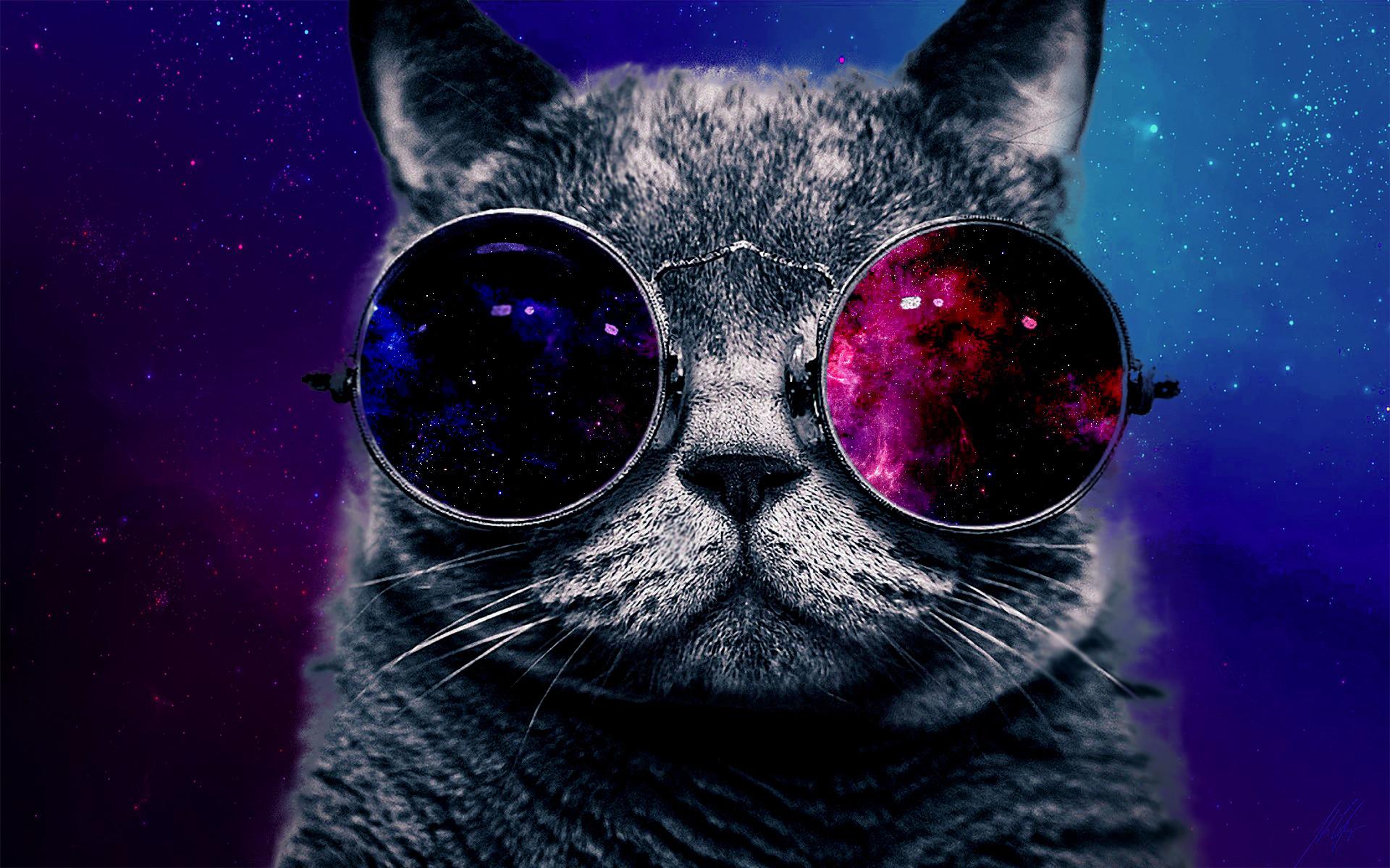 обои на рабочий стол кот в очках всего многообразия