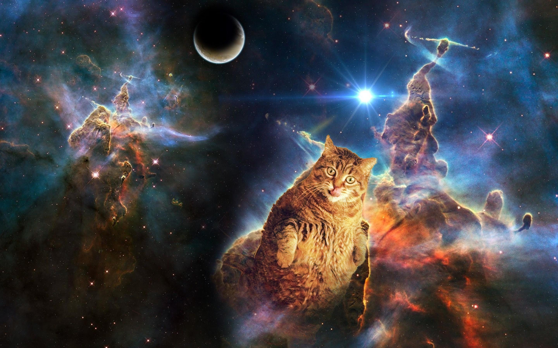 Space cat wallpaper dump ?