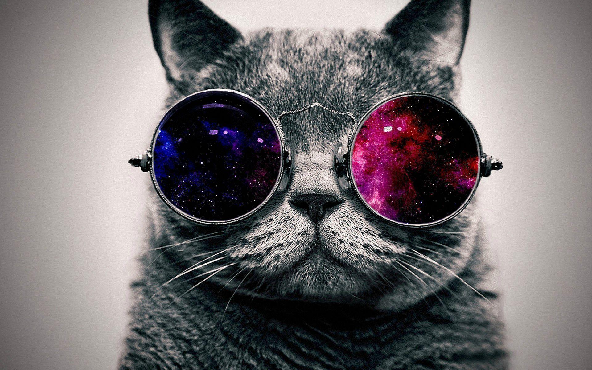 Download Cool Cat Wallpaper   Full HD Wallpapers