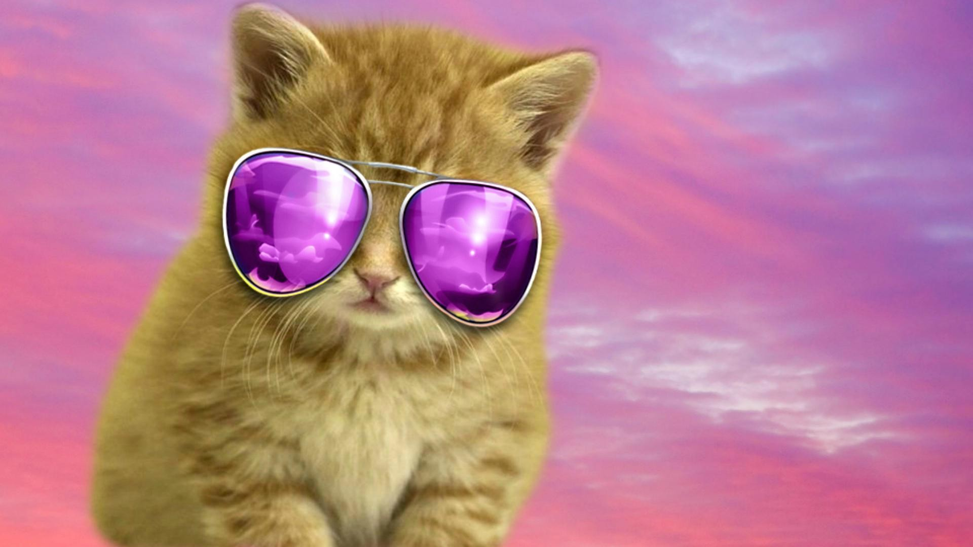 Cool Cat Backgrounds – Wallpaper Cave