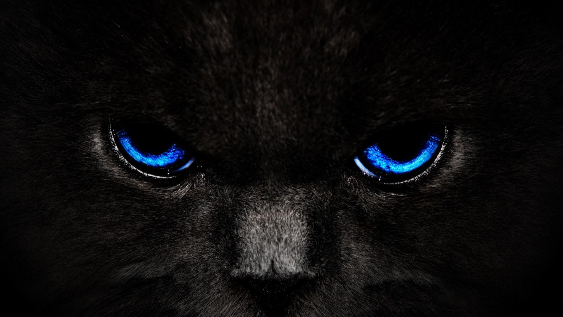 black cat blue eyes wide wallpaper