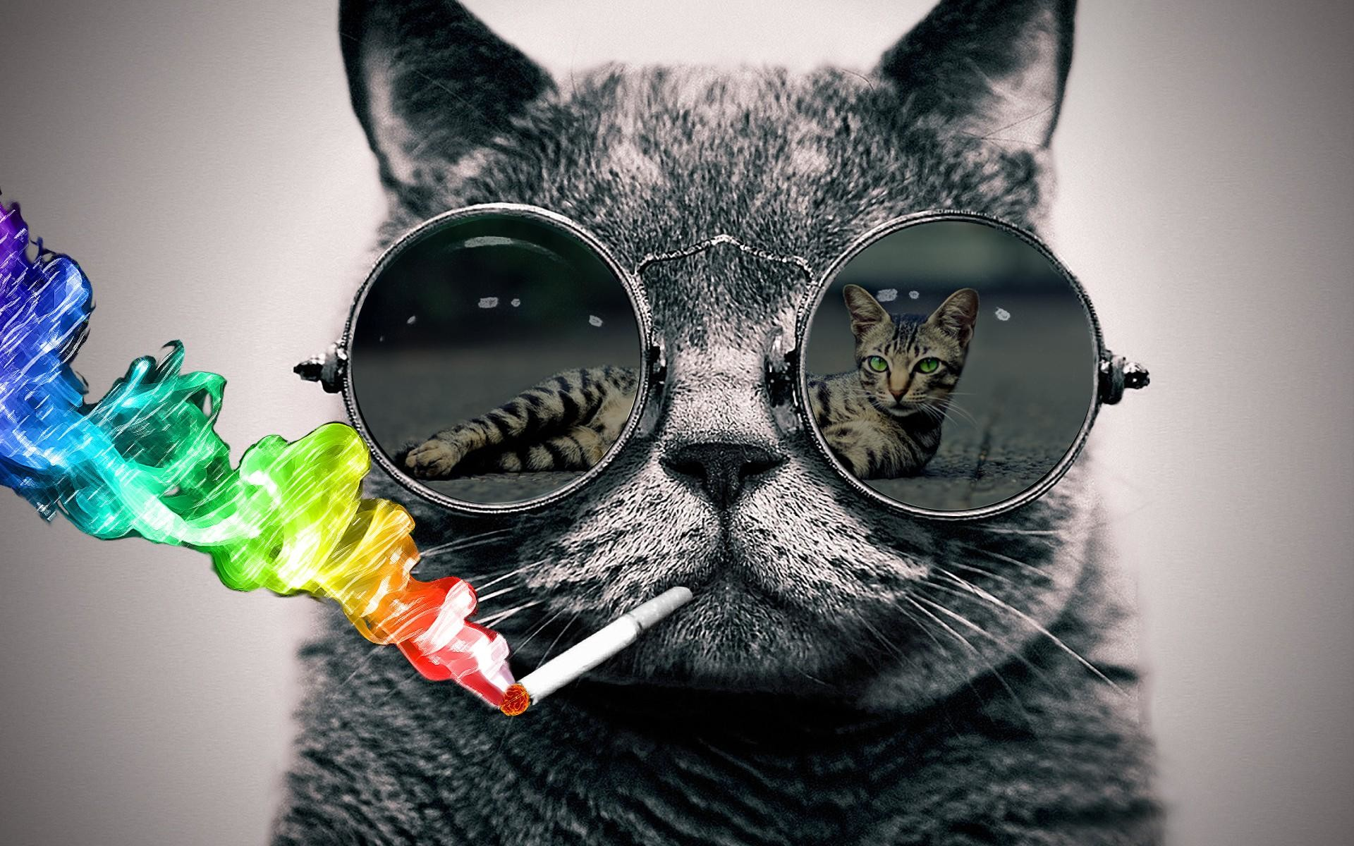 Cat with sunglasses wallpaper (Photoshop) – rank them please