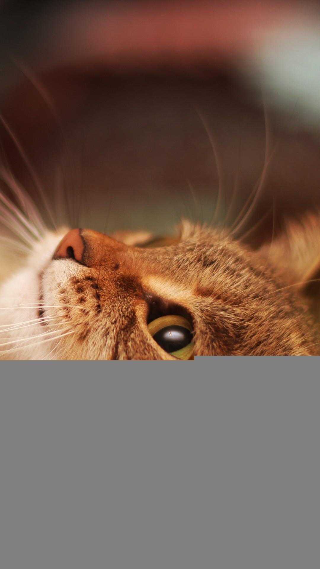 Lying Cool Cat Beautiful iPhone 8 wallpaper