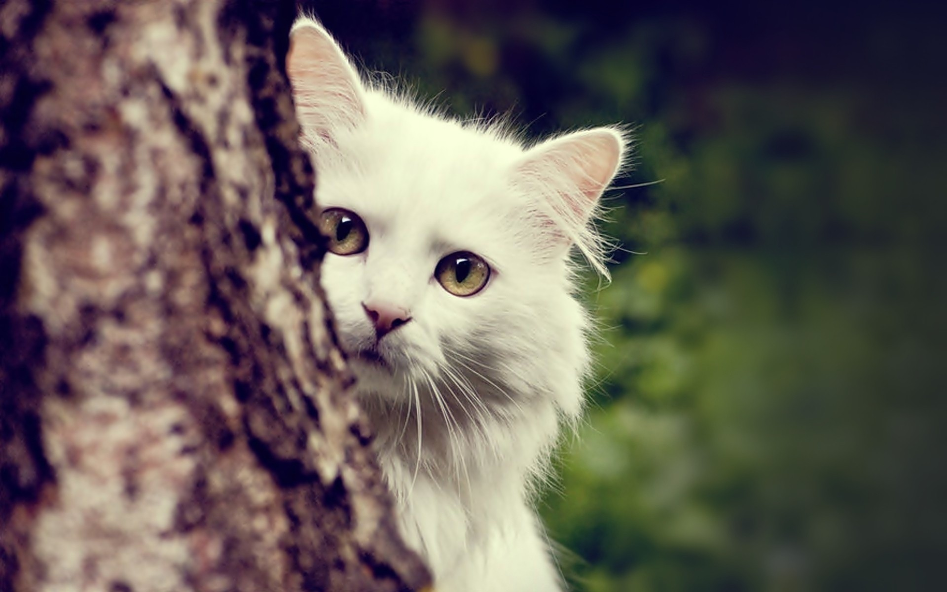 Cat Wallpapers Picture …