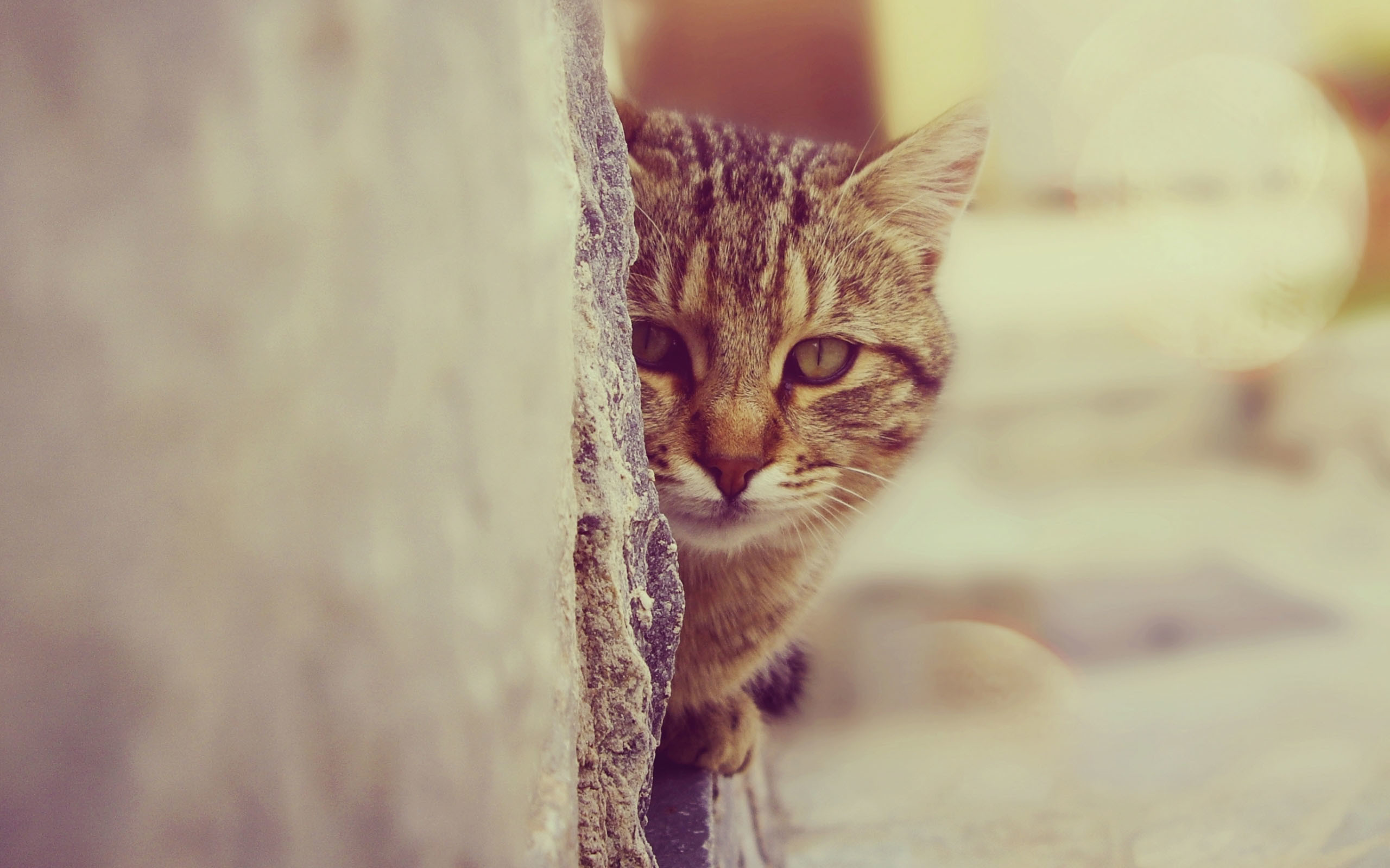 cool cat wallpapers 67