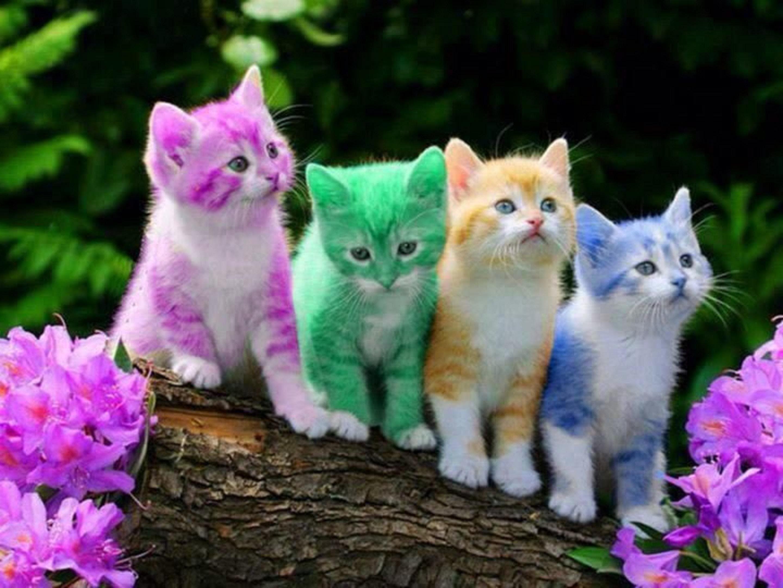 Cool Cat HD Wallpaper – WallpaperSafari
