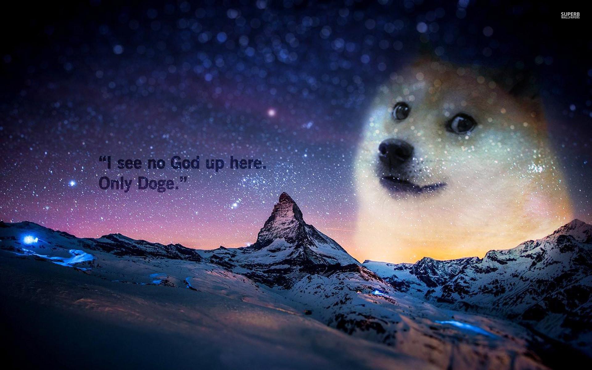 doge wallpaper – Google Search