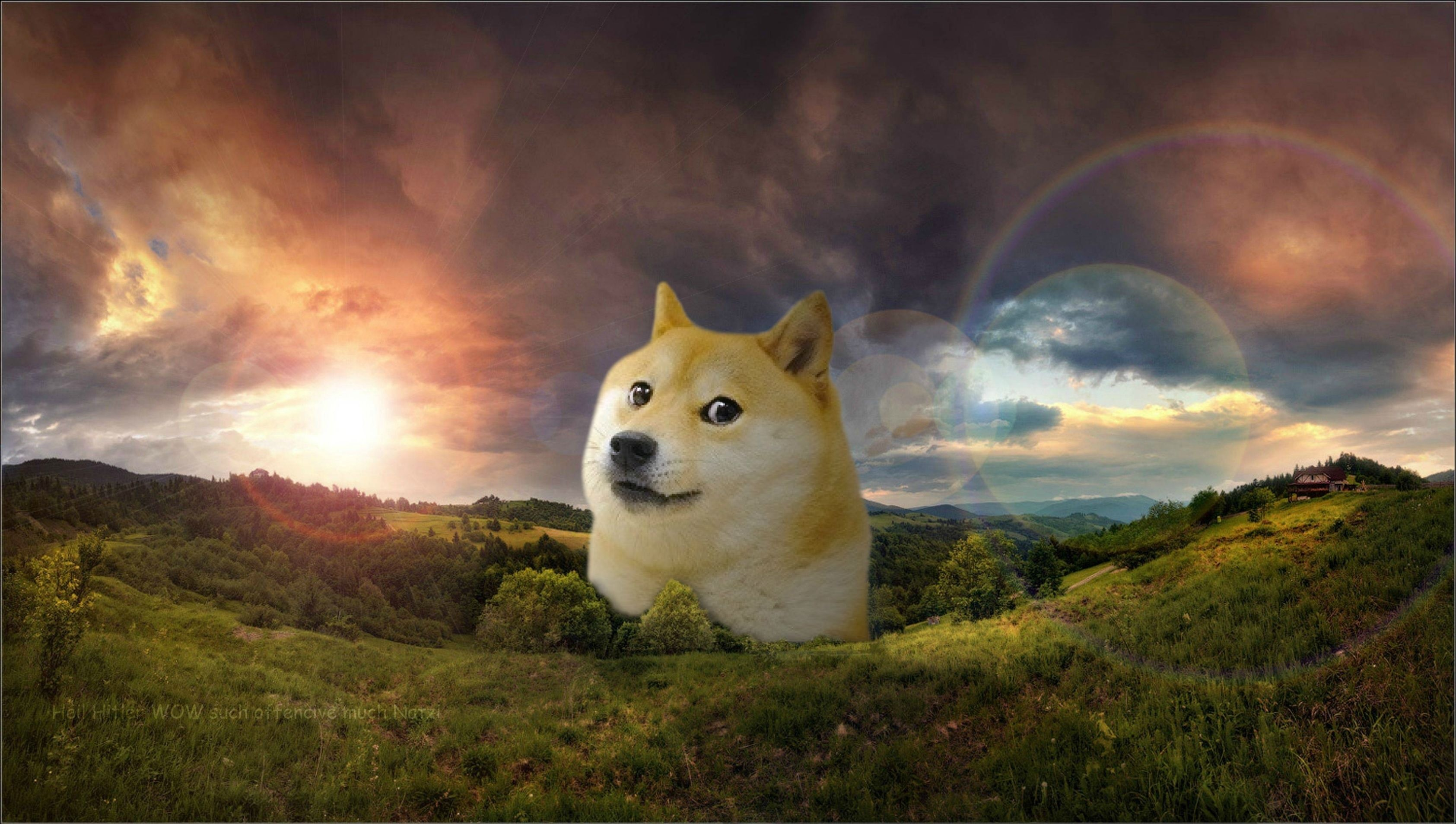 doge-wallpaper-3.jpeg829 KB