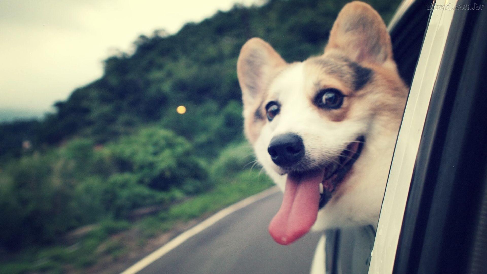 So doge meme – Doge Wallpaper (1920×1080) (226017)