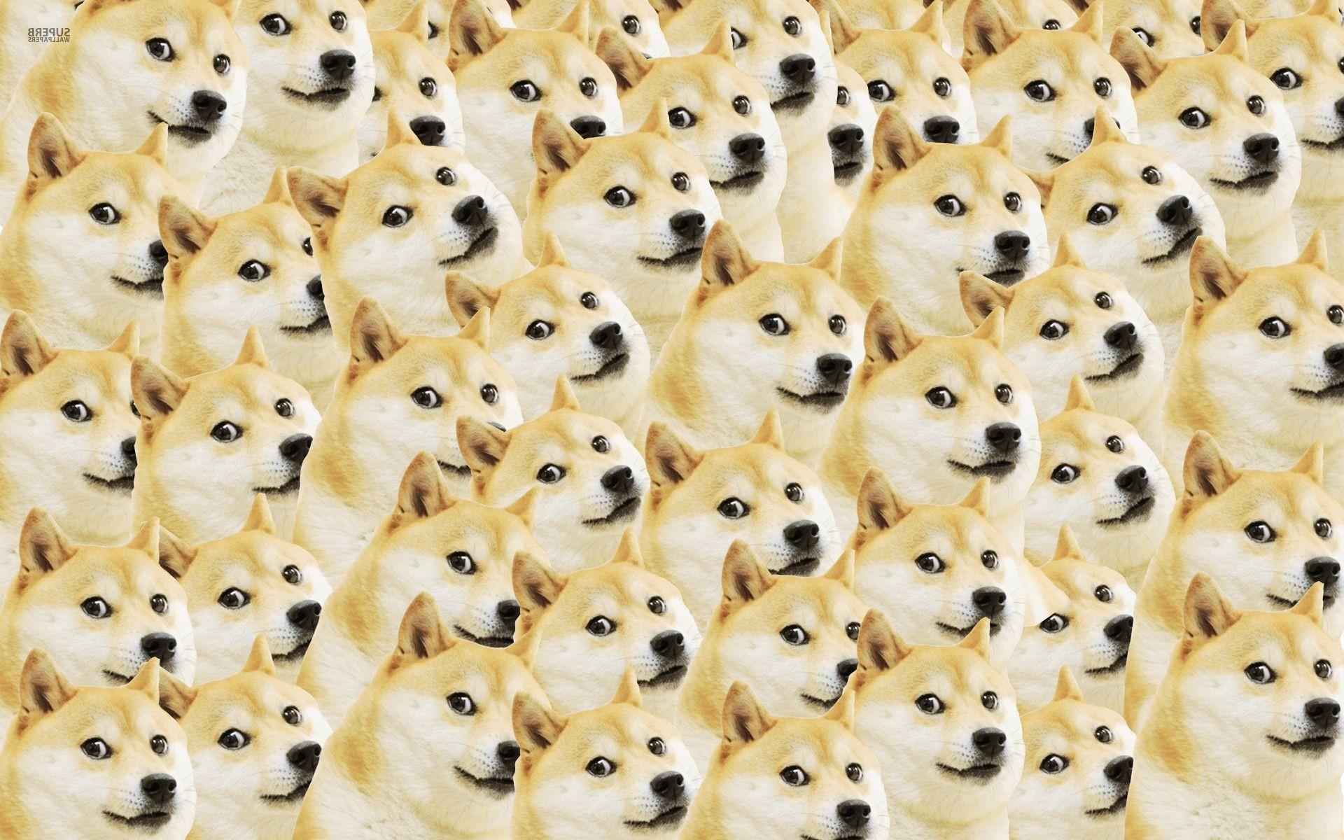 DOGE IS MOON Doge Wallpaper 1920×1200 .