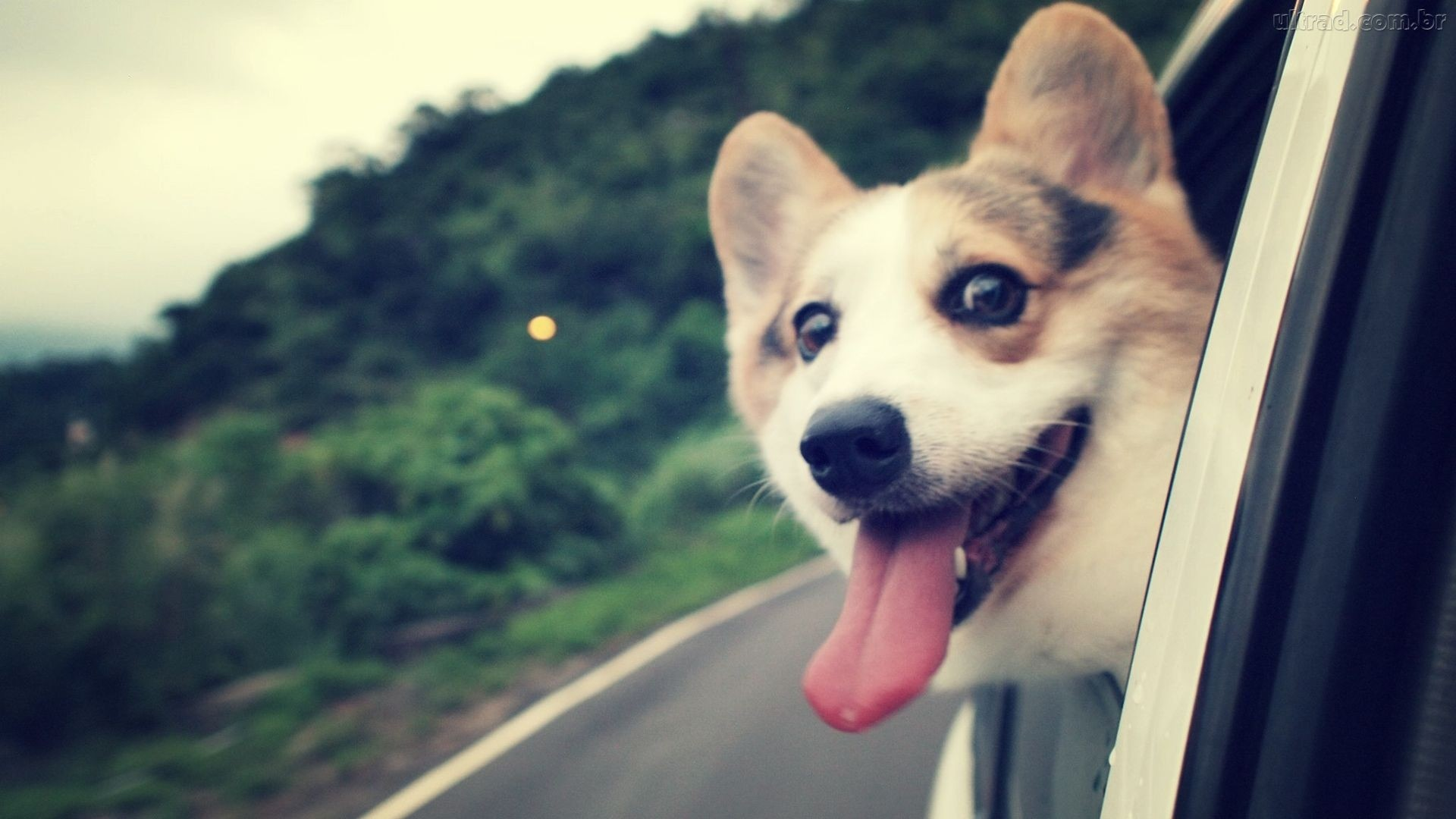 Keys: doge, internet, wallpaper, wallpapers, animals