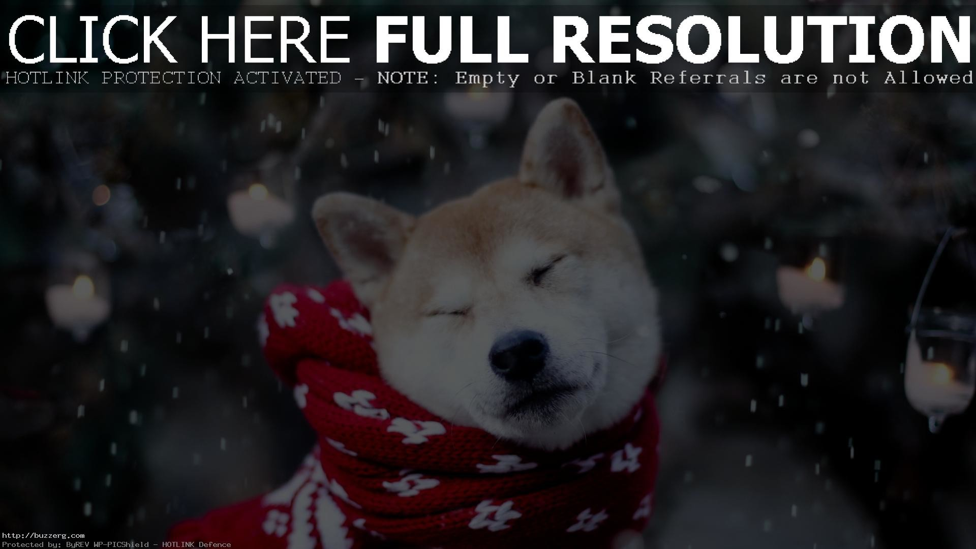 <b>Doge Shiba Wallpaper Doge Shiba Wallpaper Doge Download</b> Sizes