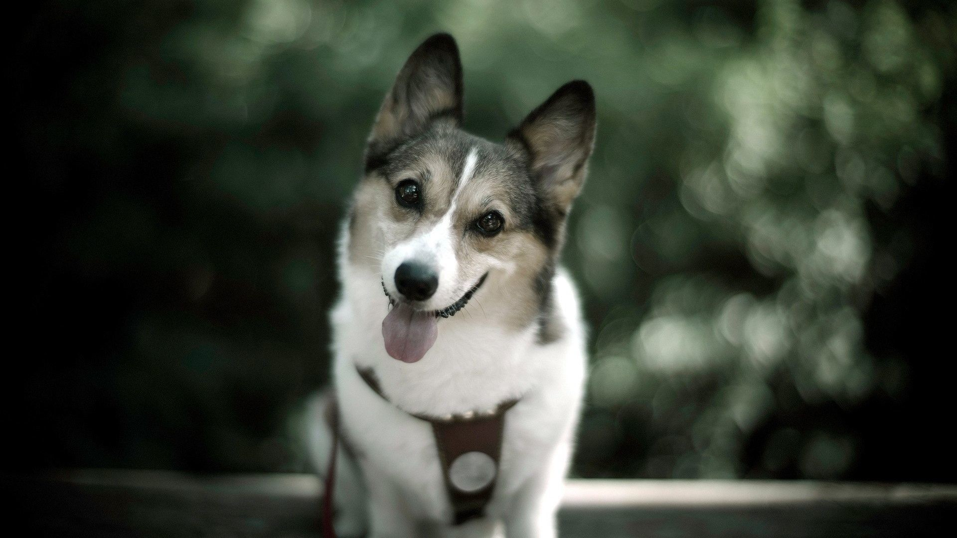 Animal Wallpaper: Cute Dog Wallpaper with High Resolution.