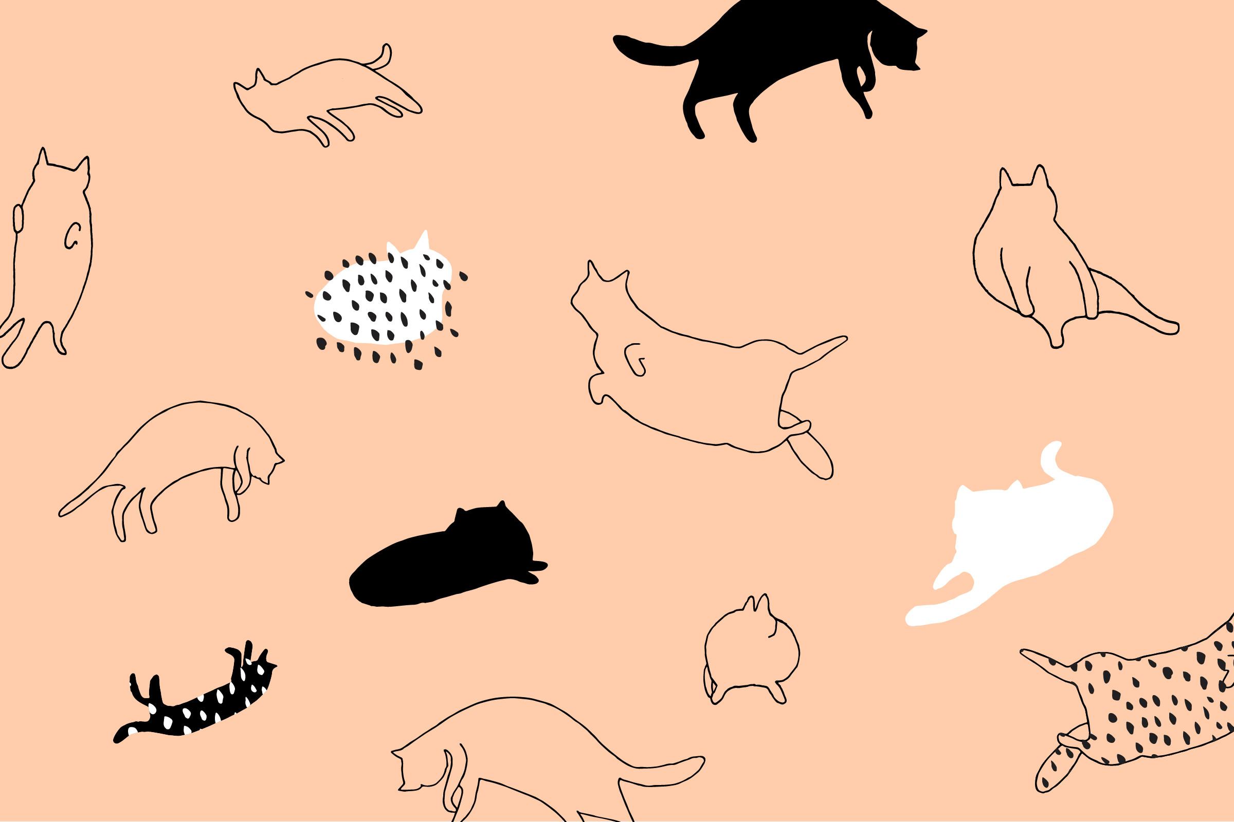 Download Cats on Peach Desktop Wallpaper