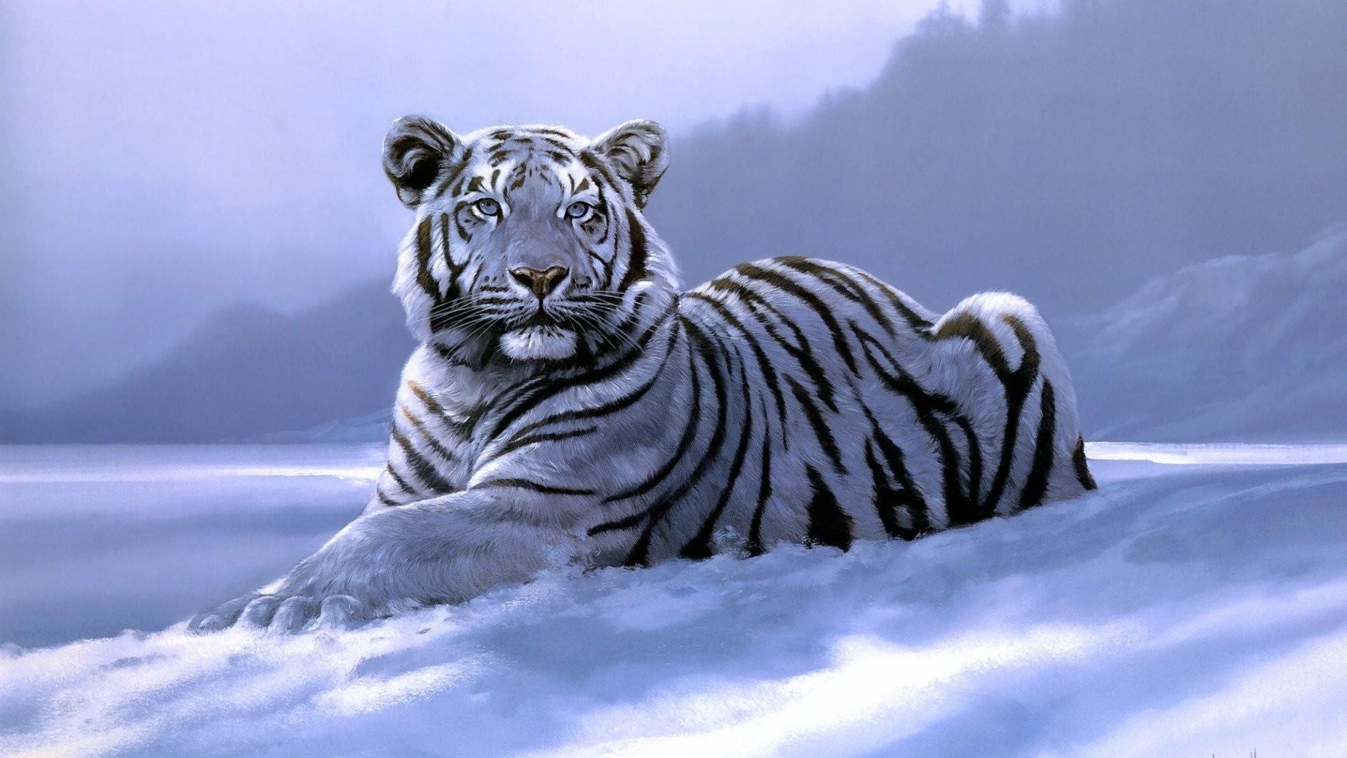 Winter Tag – Tigers Big Wild Tiger Laying Wintertime Cat Winter Siberian  Art Snow Fantasy White