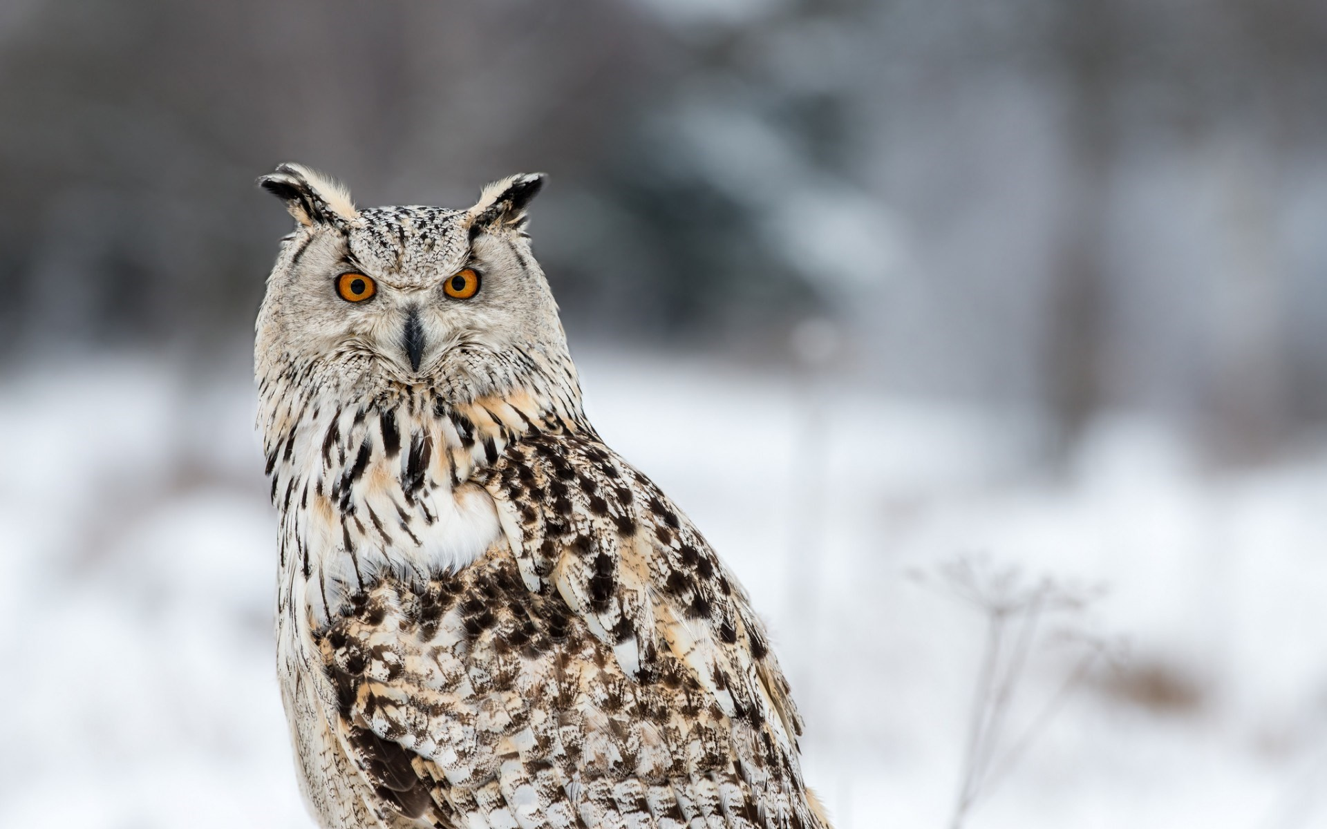 Owl Wallpapers HD images – WallpaperHDimage