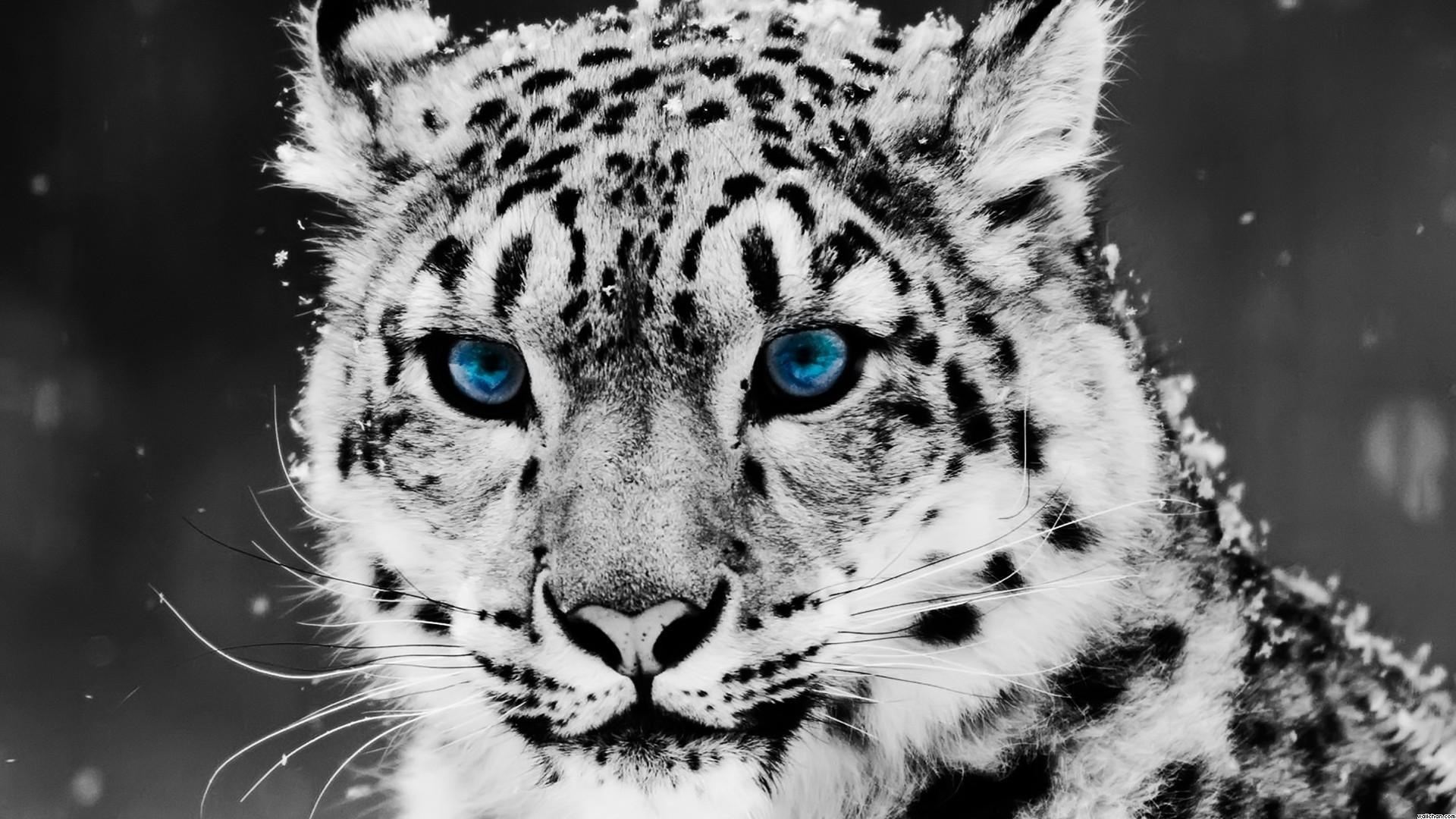 10. animal-wallpapers-for-desktop90-600×338