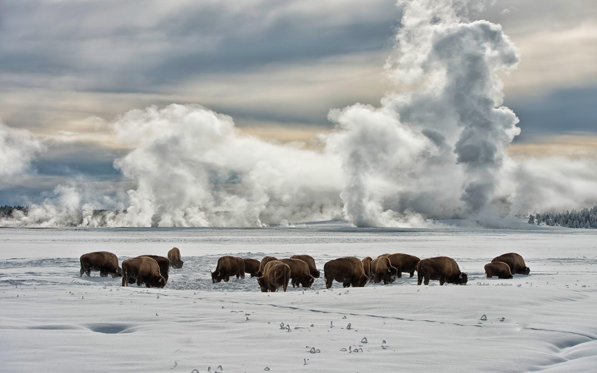 20 Fantastic HD Animal Herd Wallpapers