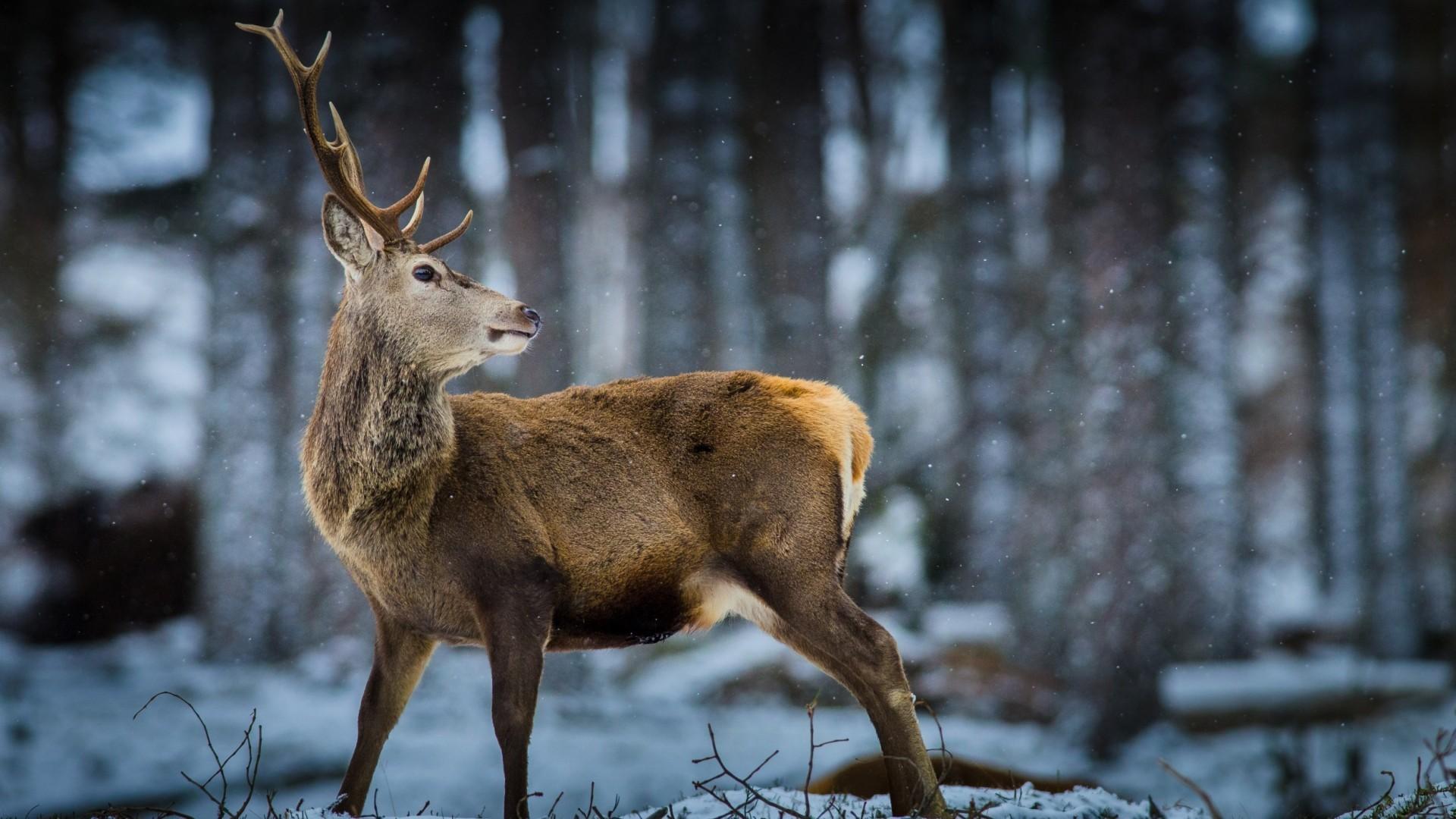 Winter Animal Scenes Wallpaper – WallpaperSafari