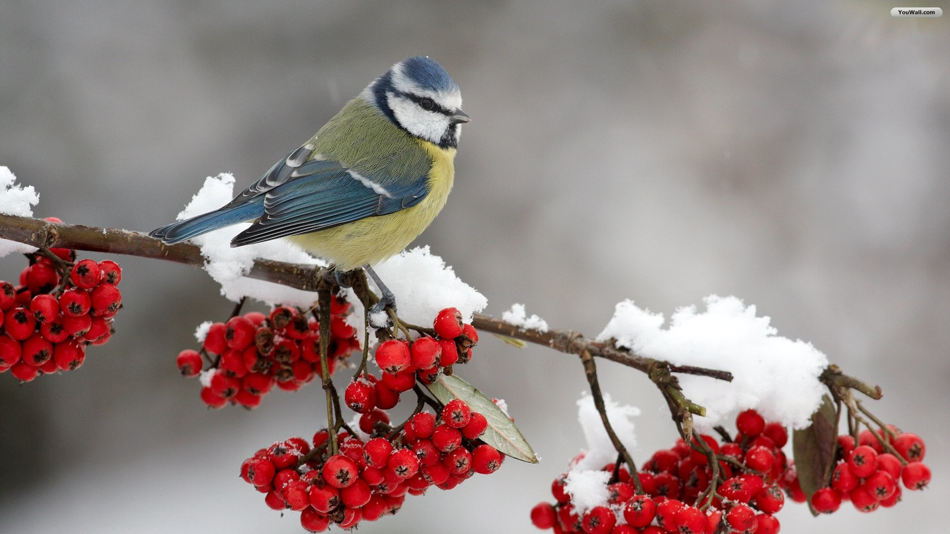 Photos of Winter birds to share on facebook | Ventube.com Birds In Winter  Screensavers