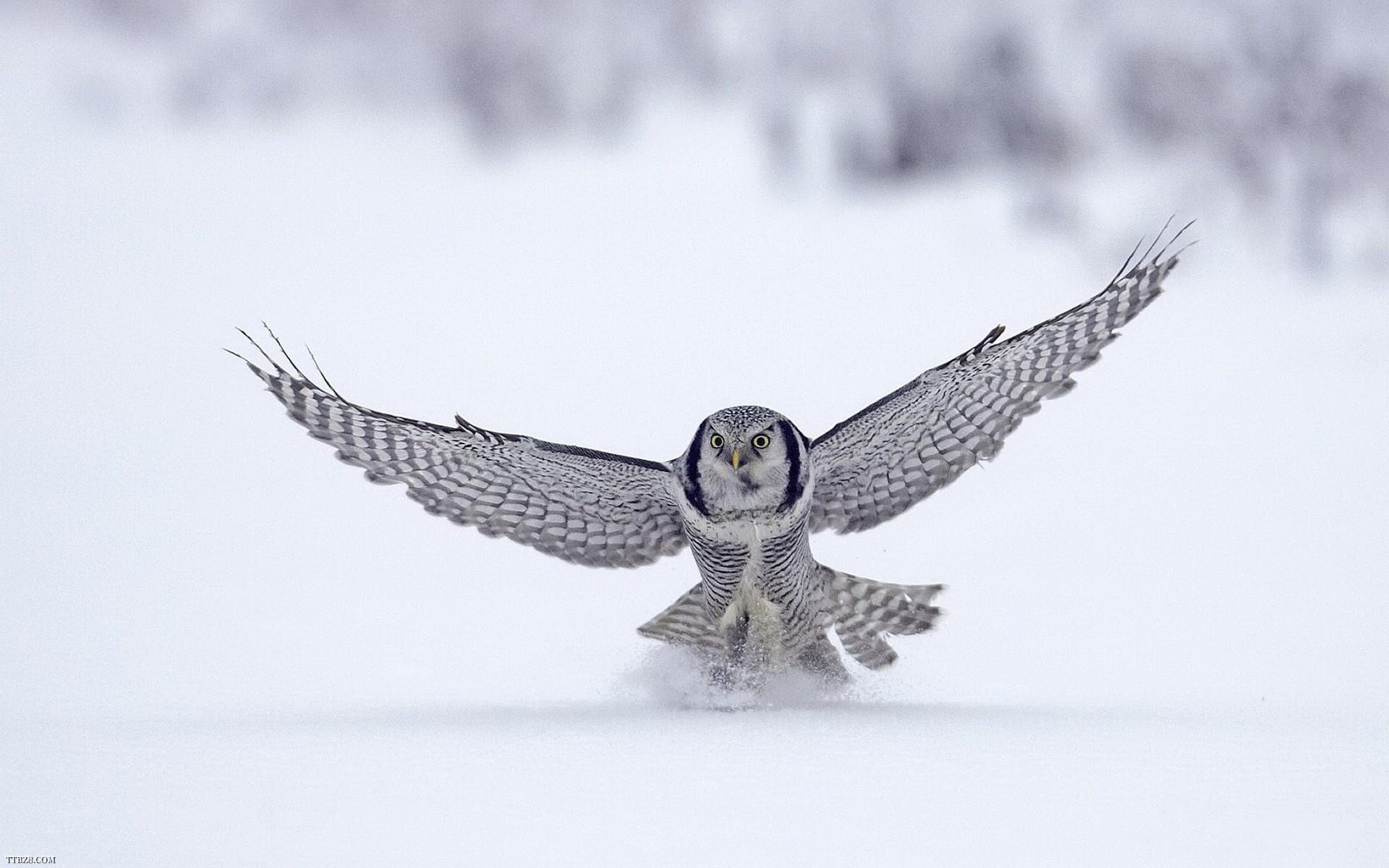 Animals Owl Cute Bird Wallpaper Download