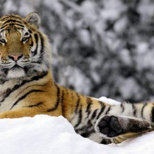 Animal Winter Desktop