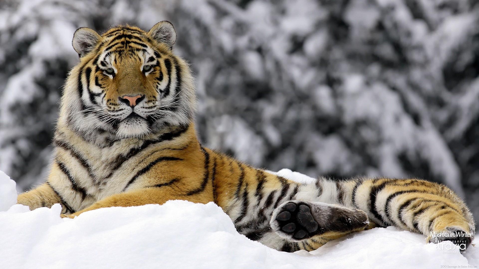 in winter animal wallpaper | Desktop Backgrounds for Free HD Wallpaper .